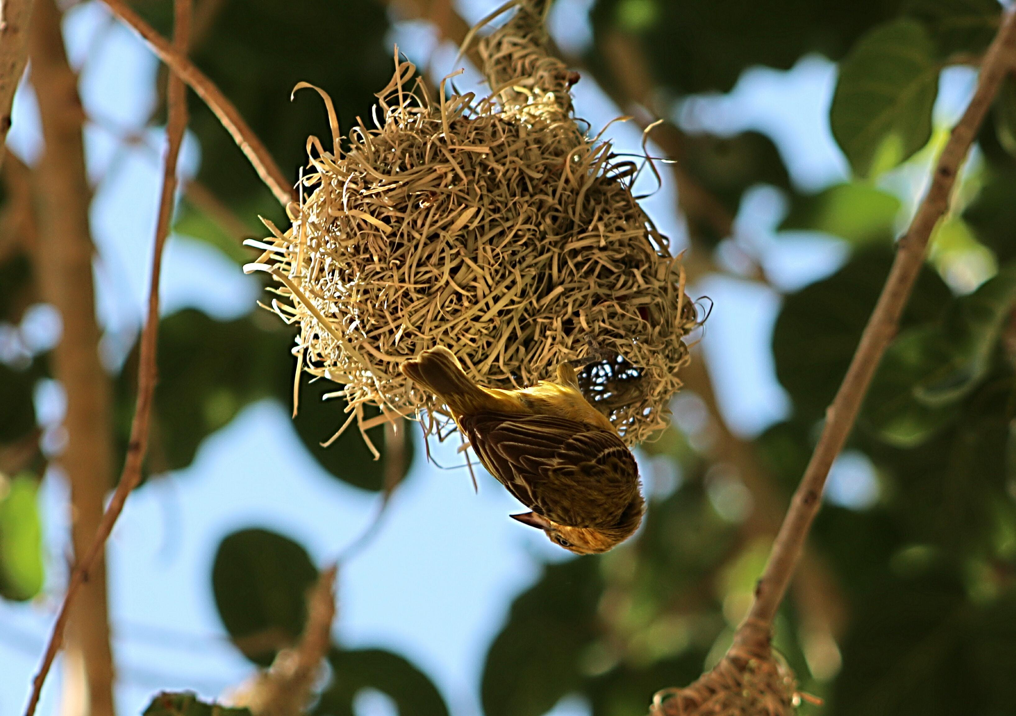 Картинка птица в гнезде на дереве