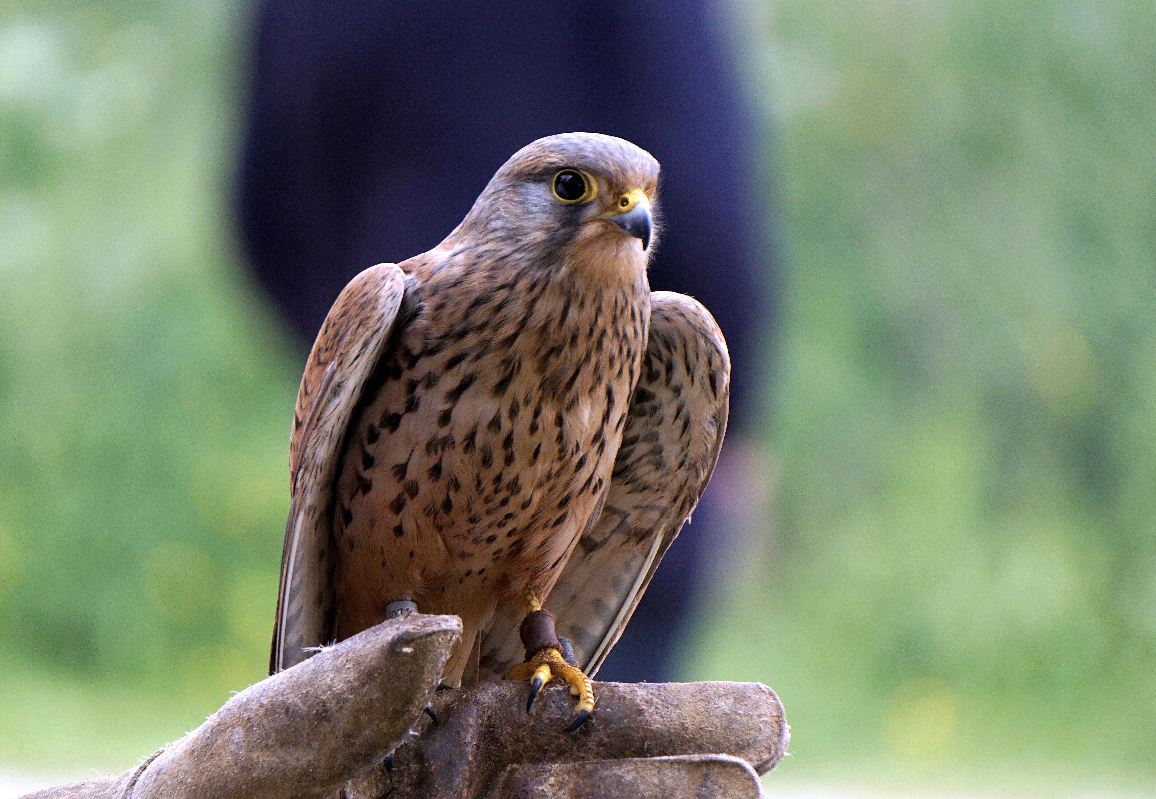 banco de imagens pássaro pico animal animais selvagens bico