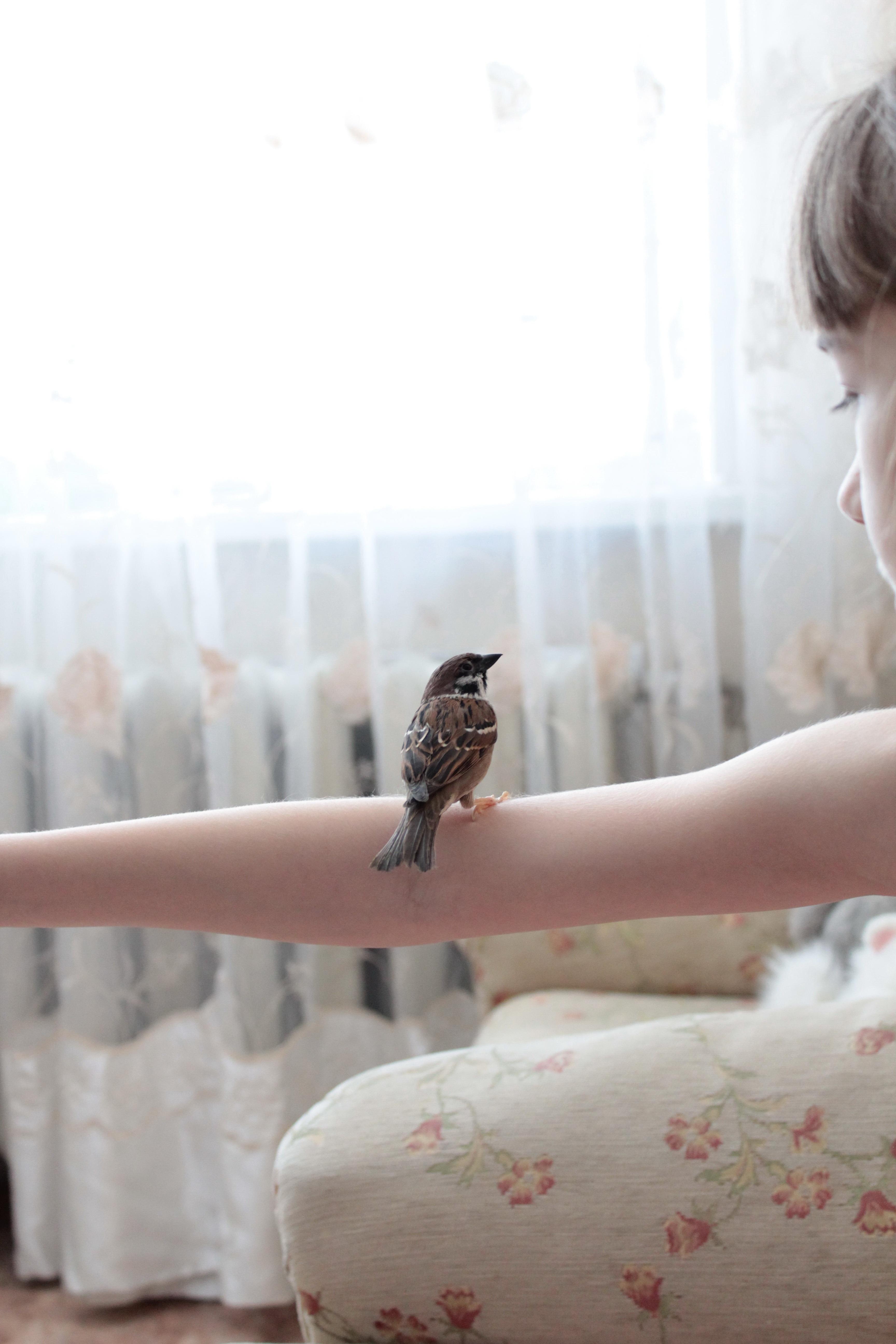 Les Moineaux De La Mariée images gratuites : oiseau, la photographie, fleur, maison