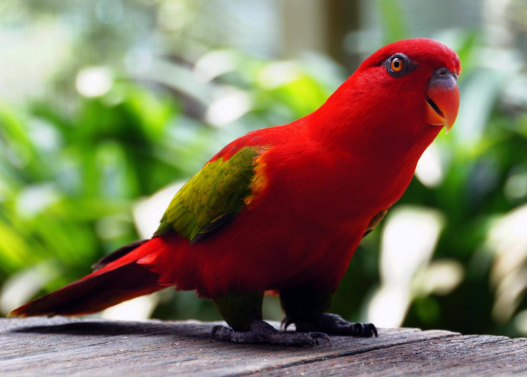 картинки попугай красный позволит сэкономить