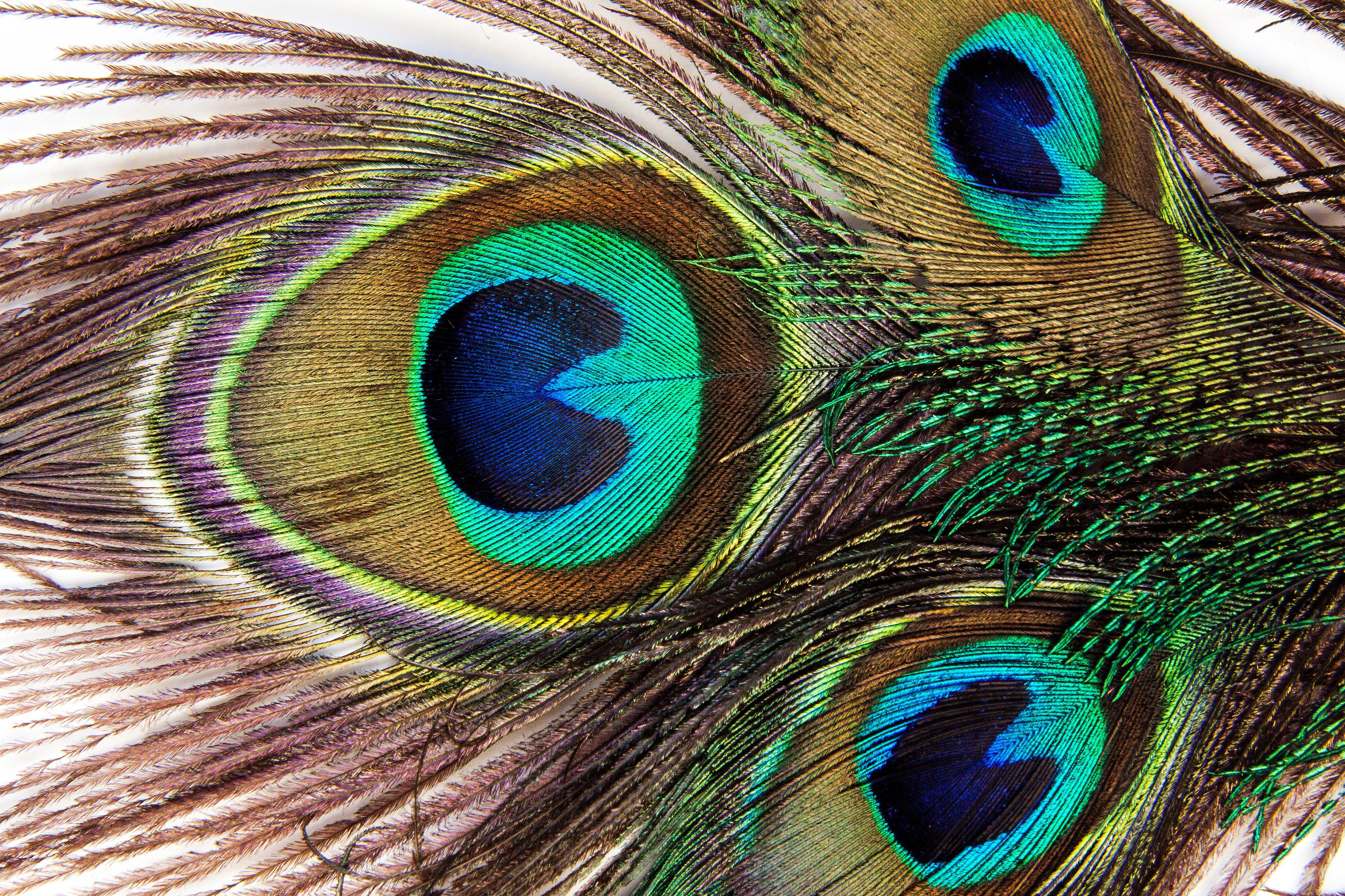 Immagini Belle Uccello Struttura Becco Macro Colorato Fauna