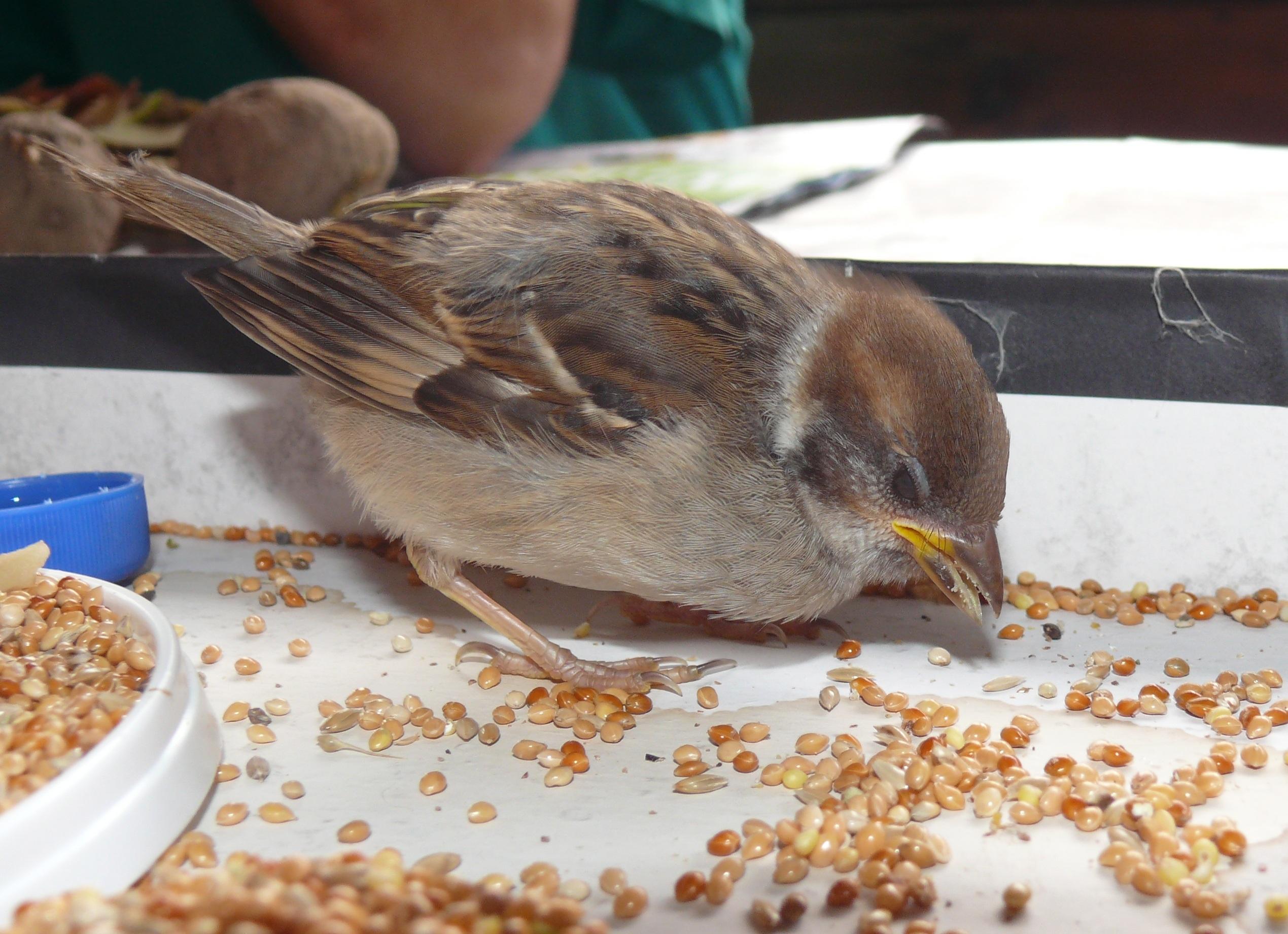 Картинка птичка ест