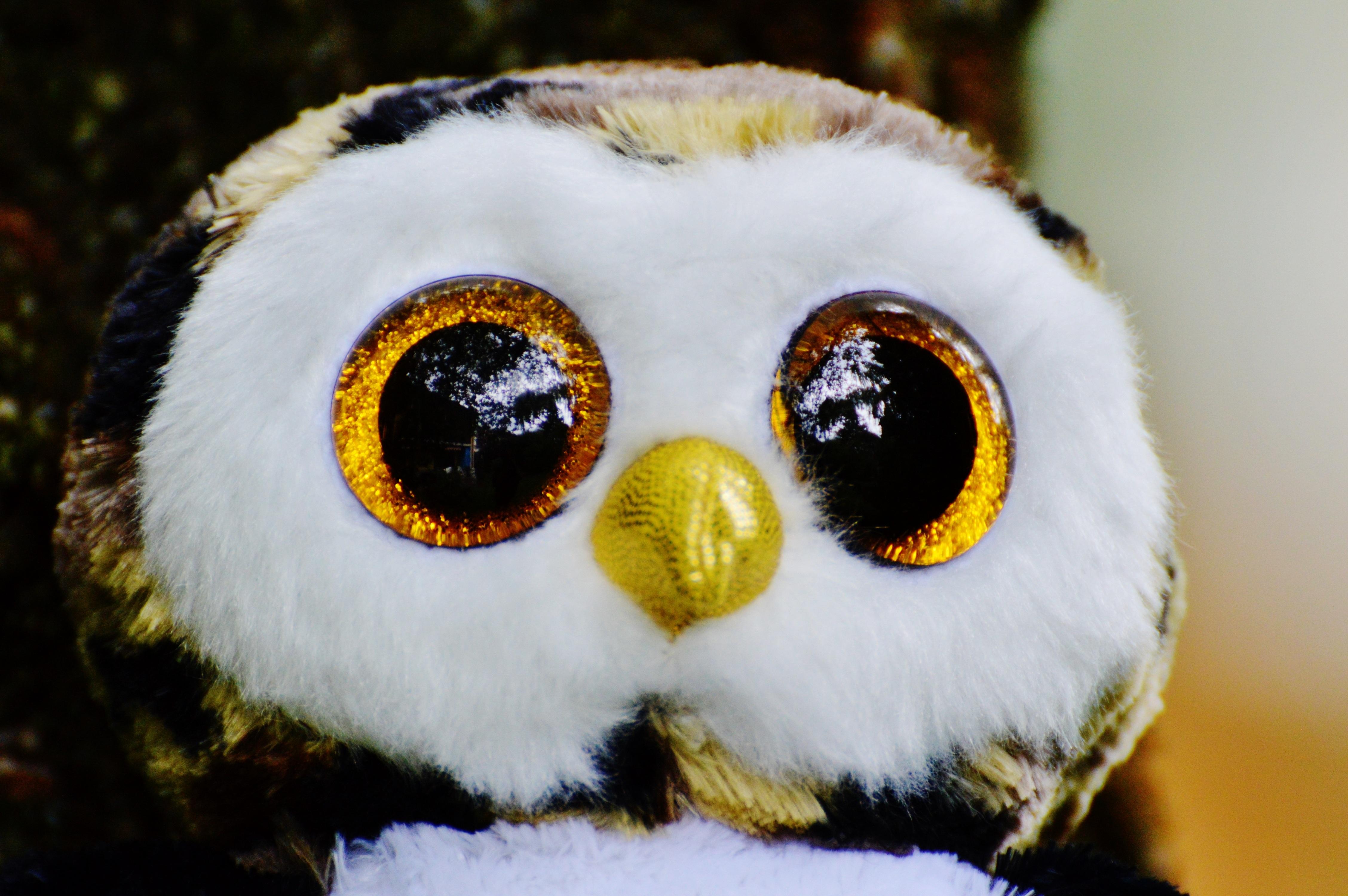 750 Koleksi Gambar Burung Hantu Yg Lucu HD