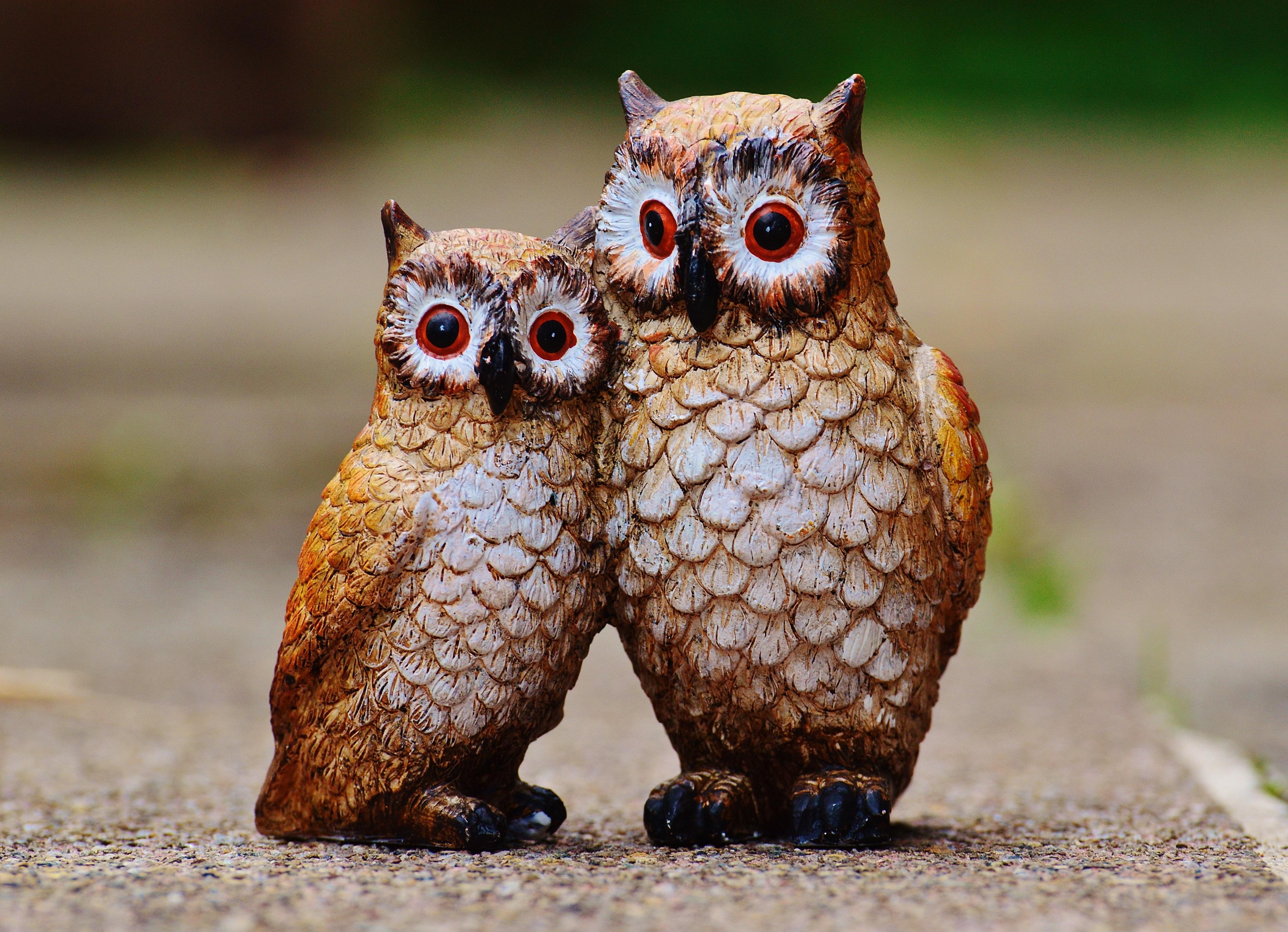 ходченкова веселые картинки с совами покупать настоящие