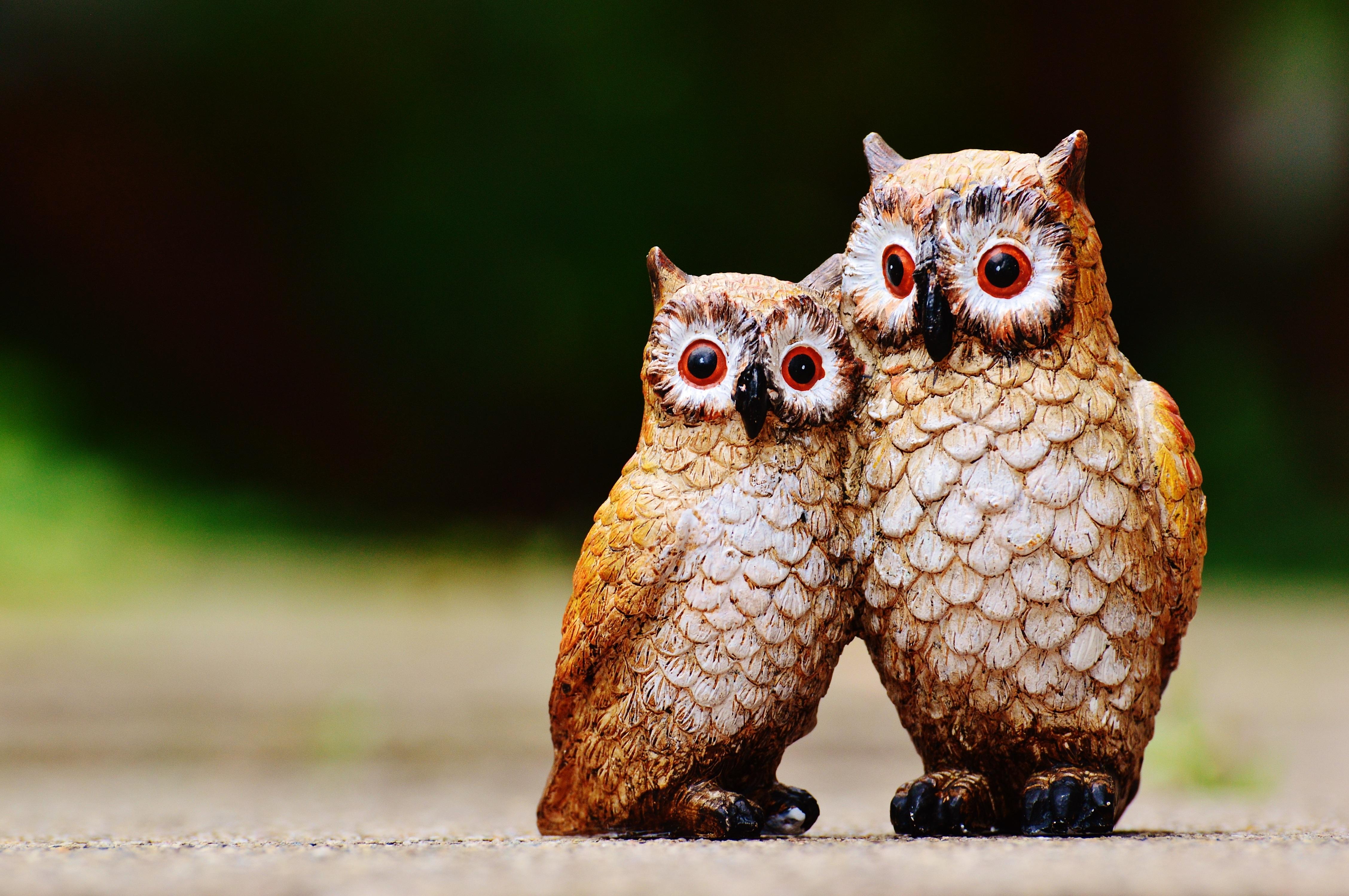 Картинки совы милые