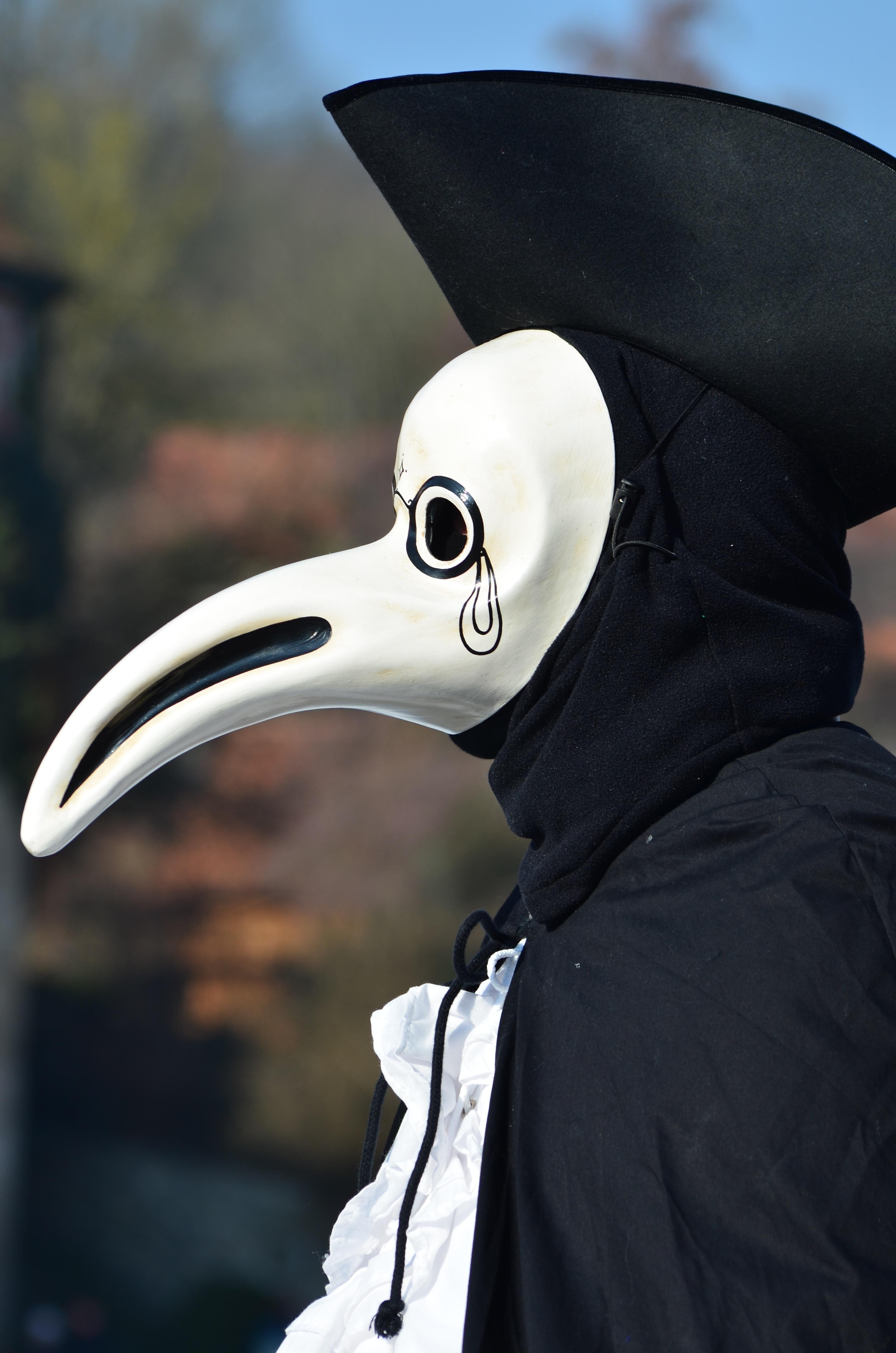 Schw Bisch gratis billeder fugl hvid karneval venedig blå tøj sort skulptur maske figur briller