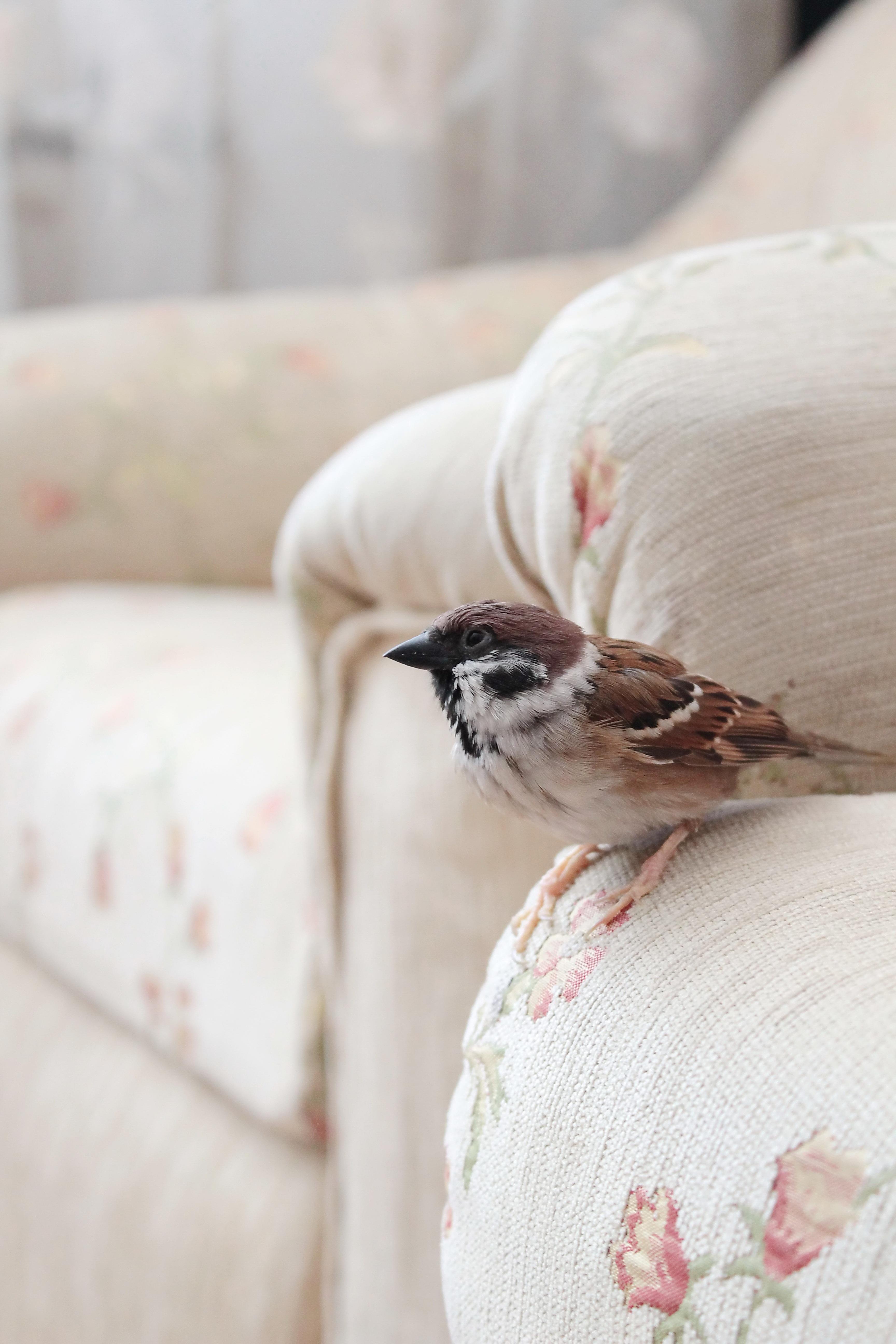 Gambar Putih Bunga Rumah Musim Semi Daging Unggas Burung Burung Kulit Burung Gereja Panduan Burung Pipit Bertengger Burung 3456x5184 709214 Galeri Foto Pxhere