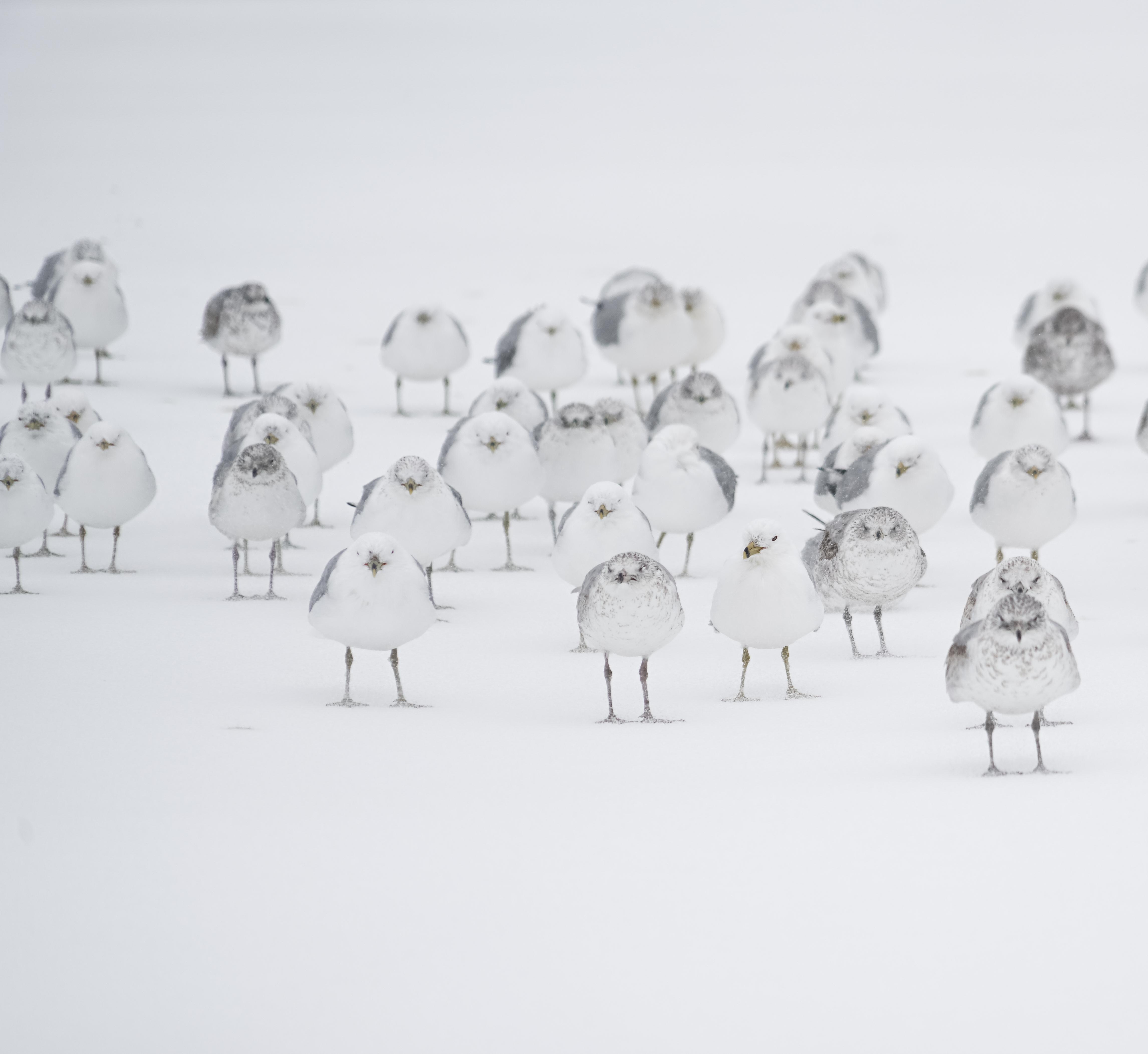 Gambar Putih Sketsa Gambar Ilustrasi Burung Terbang