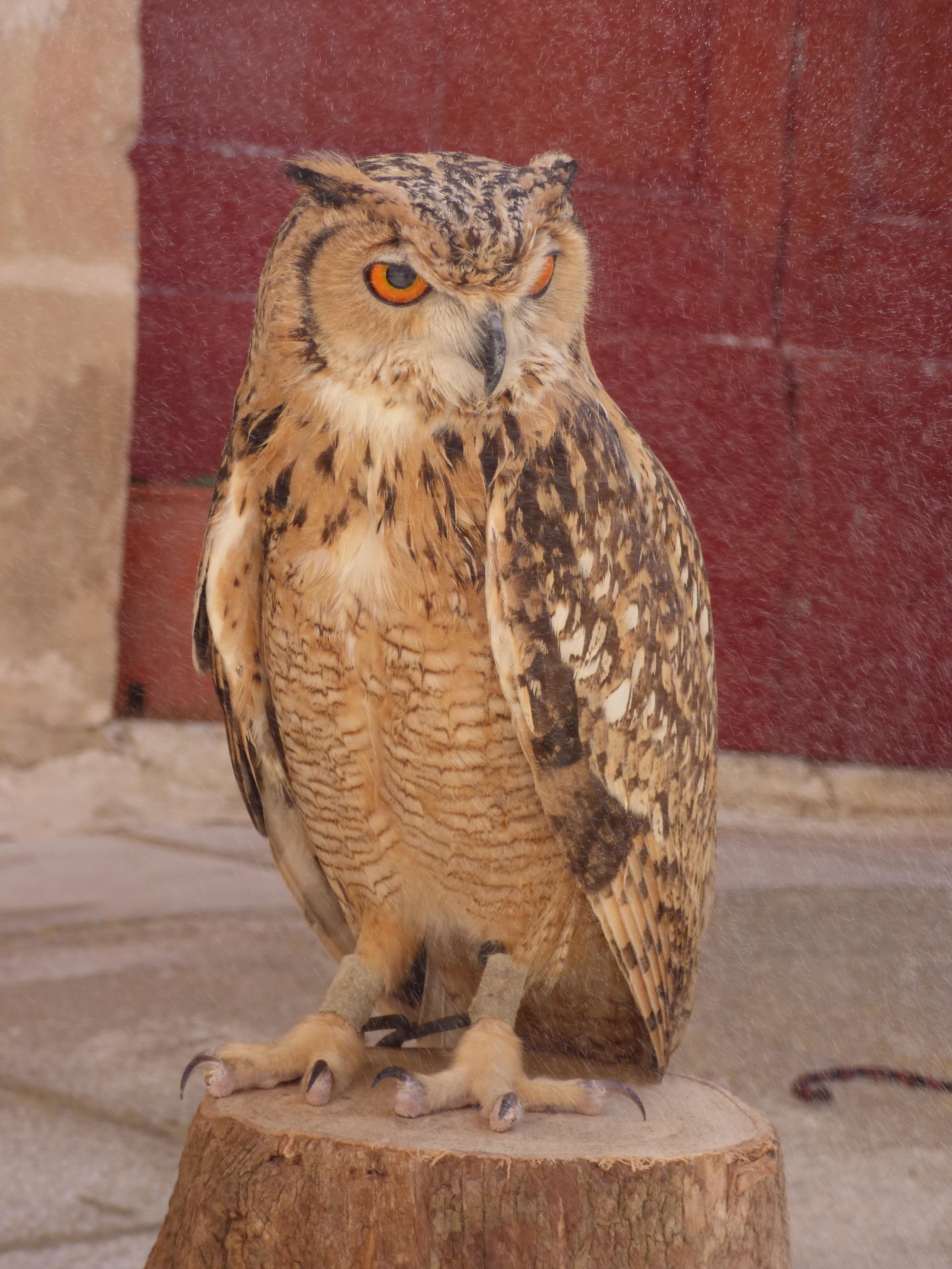 Kostenlose foto vogel tierwelt schnabel fauna