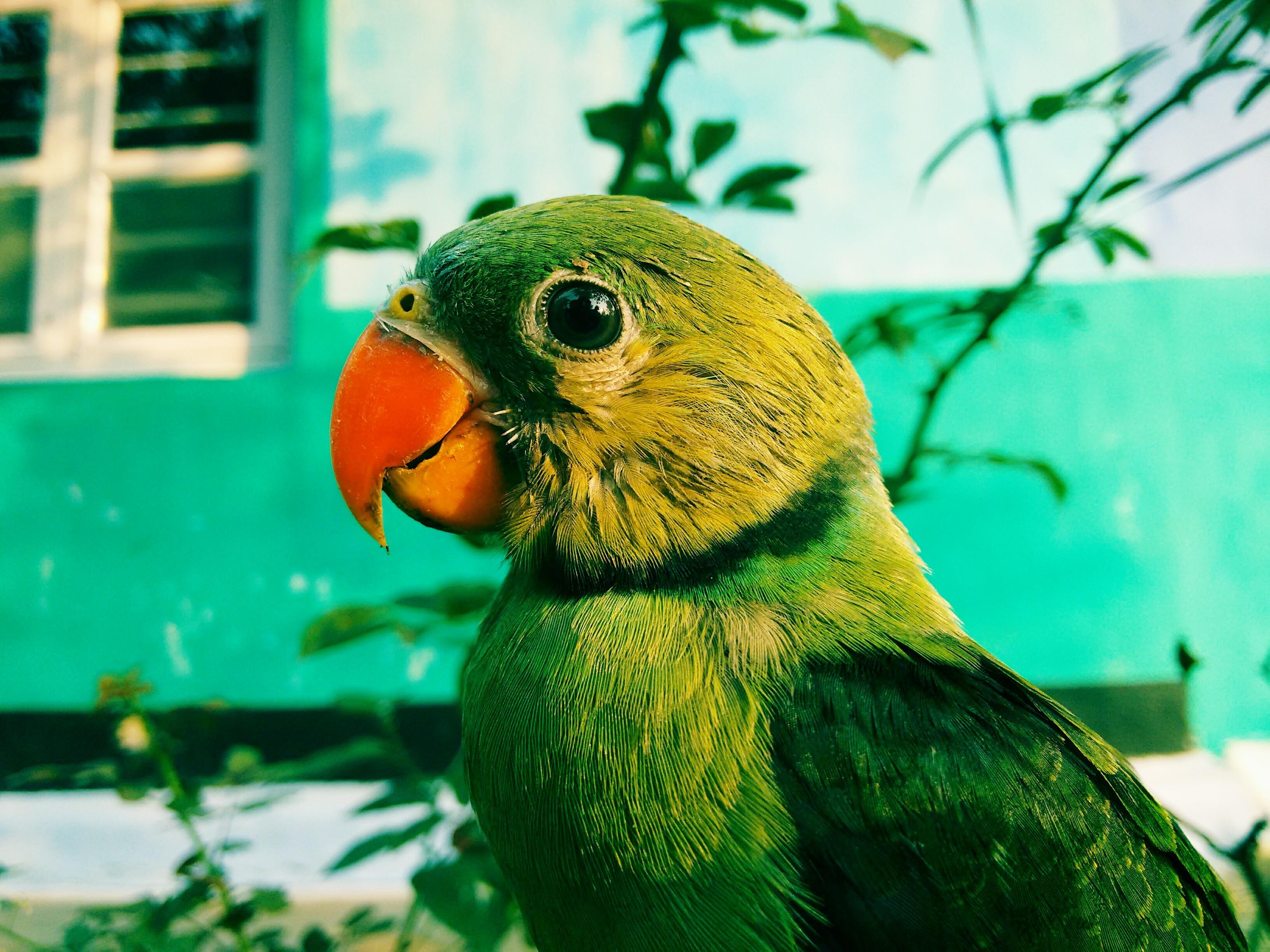 зеленые попугаи гифка работы очень