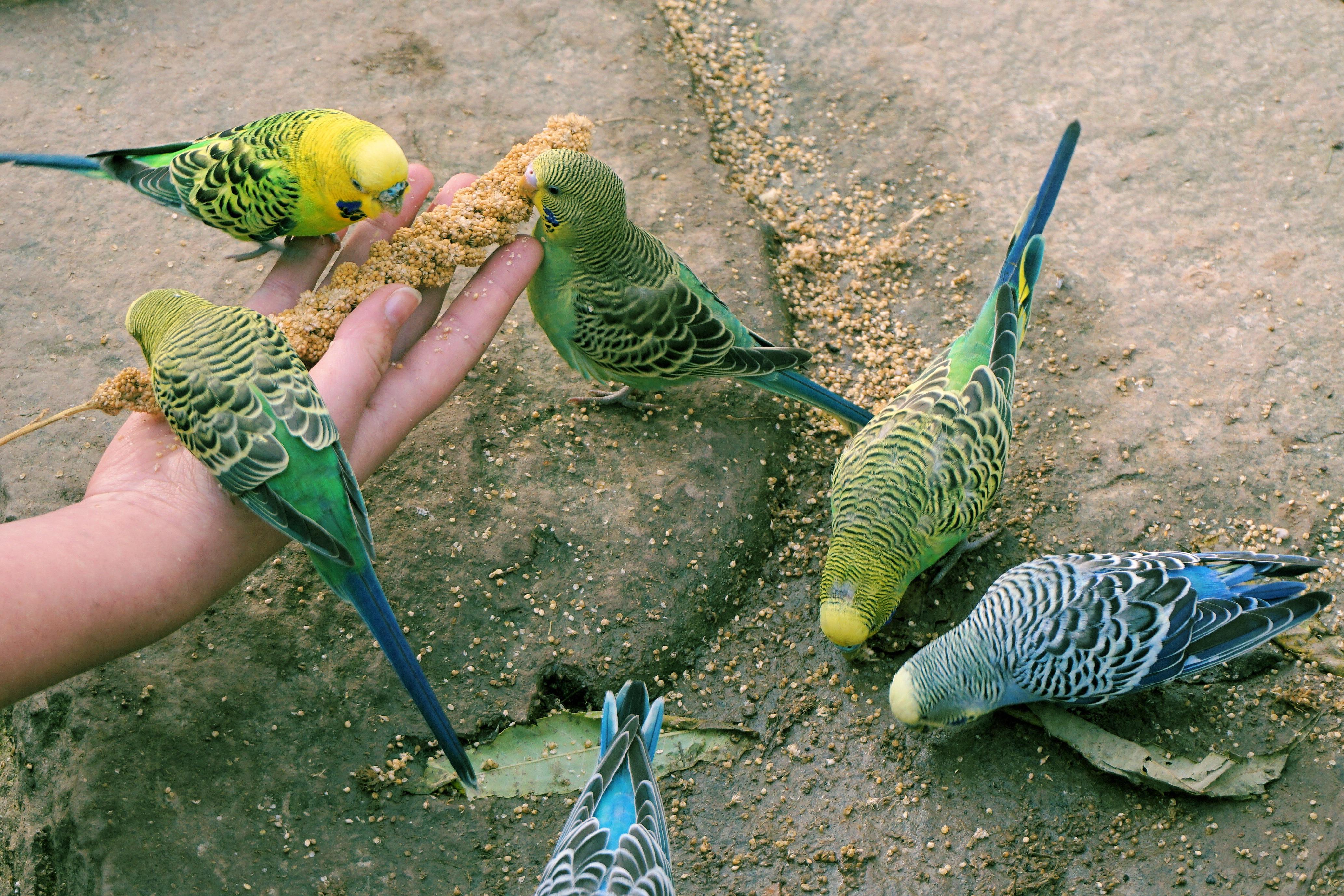 21++ Makanan hewan peliharaan burung terbaru