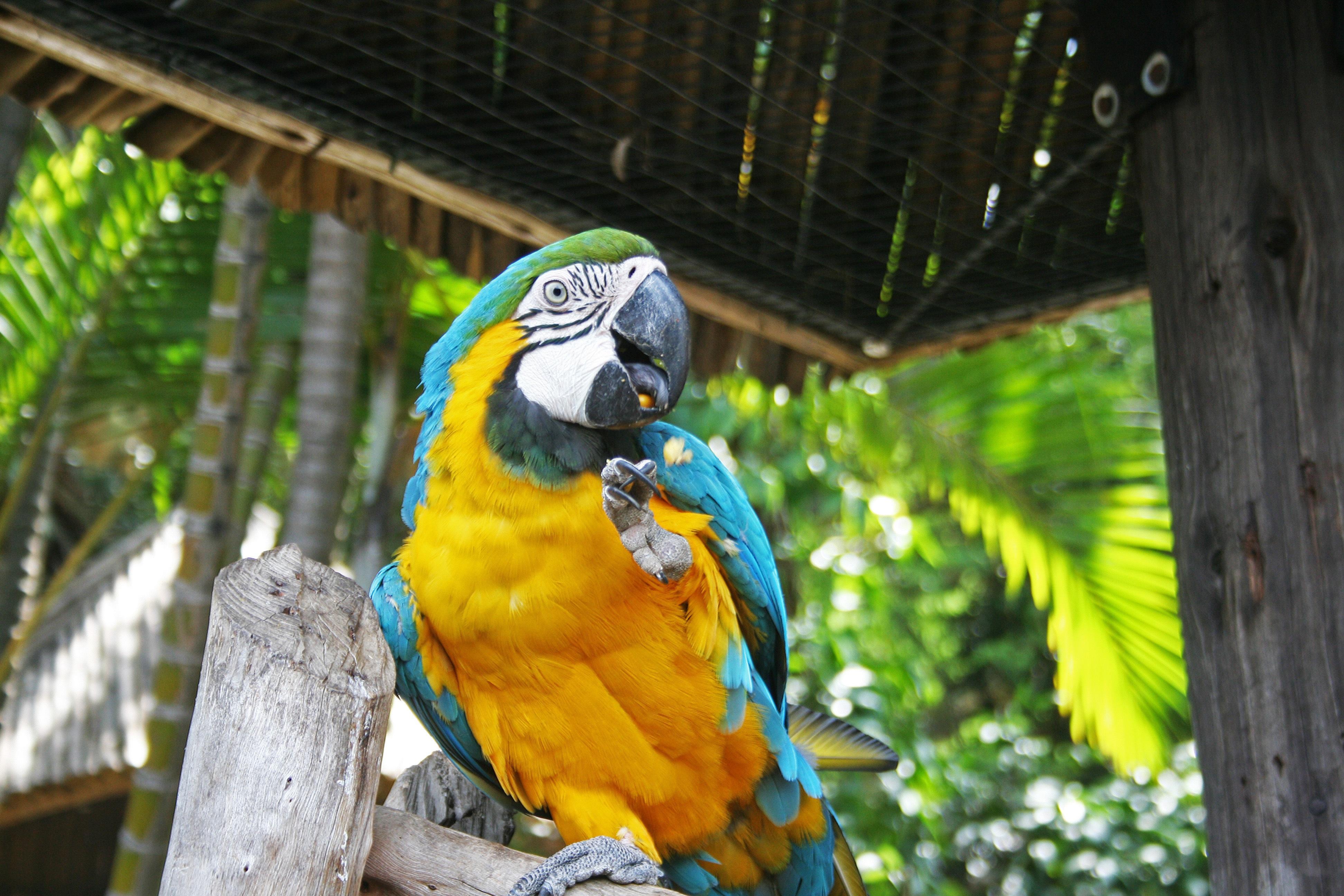 Poze Pasăre Animale Sălbatice Grădină Zoologică Junglă