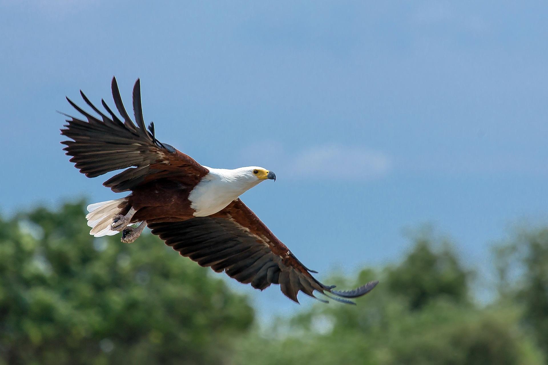 free images wing air animal wildlife beak flight africa