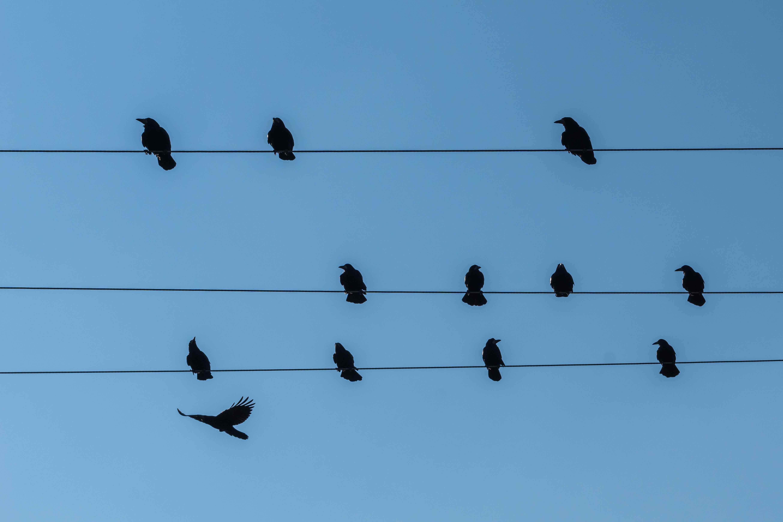 Original Birds On A Wire - DATA WIRING •