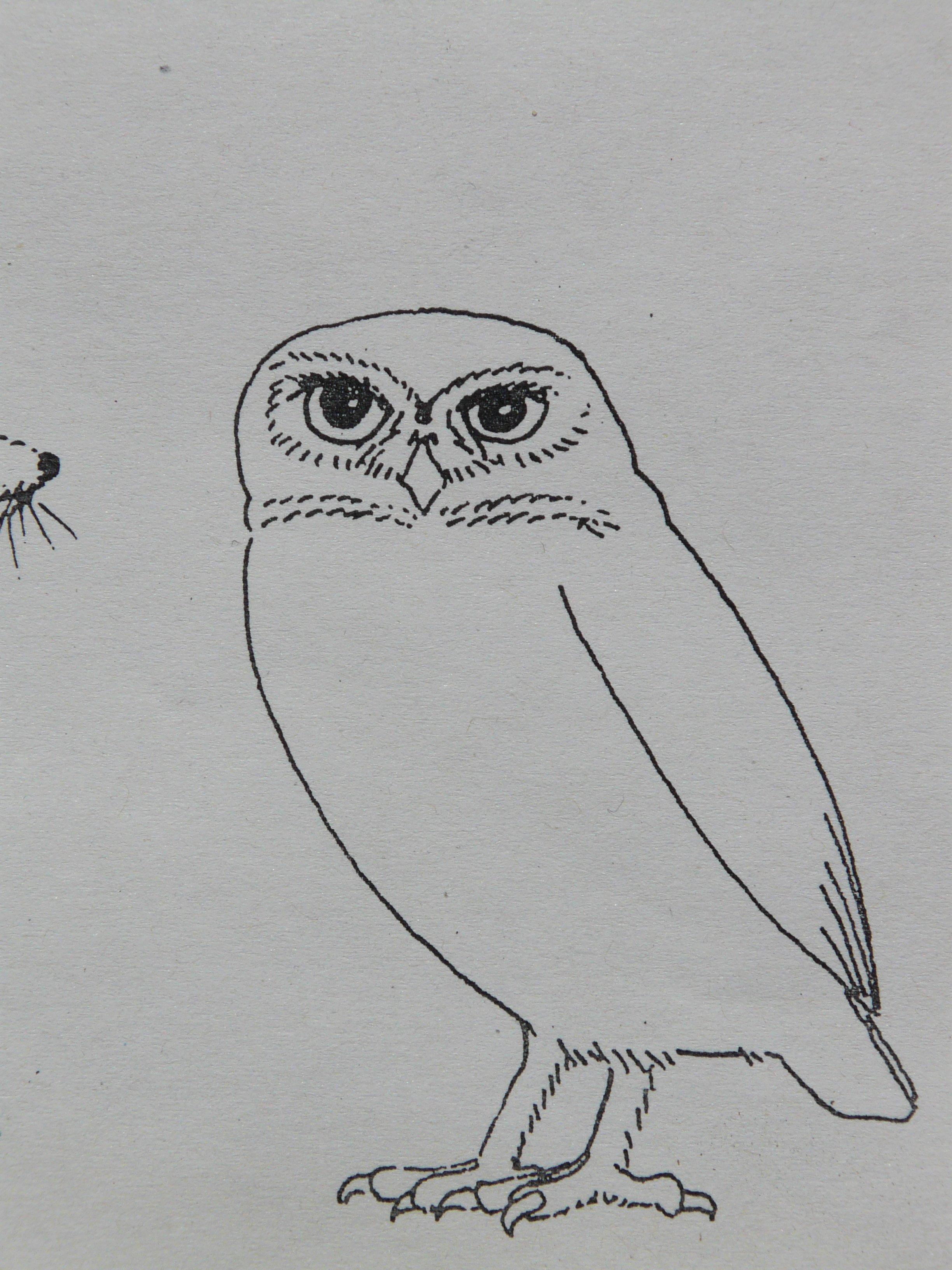 Fotos gratis : pájaro, ala, animal, pintar, búho, ave de rapiña ...