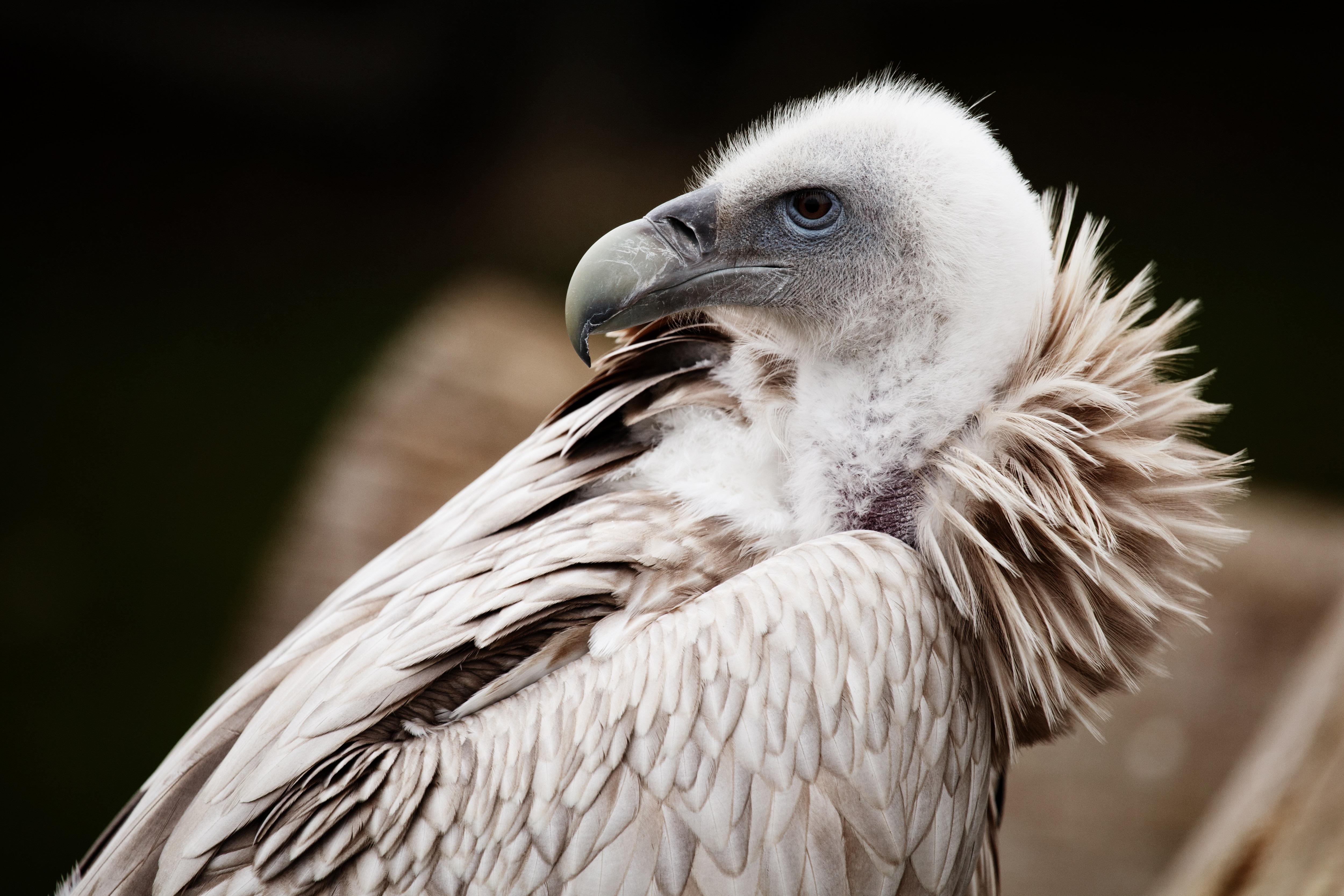 Fotos Gratis Pájaro Ala Animal Fauna Silvestre Retrato Pico