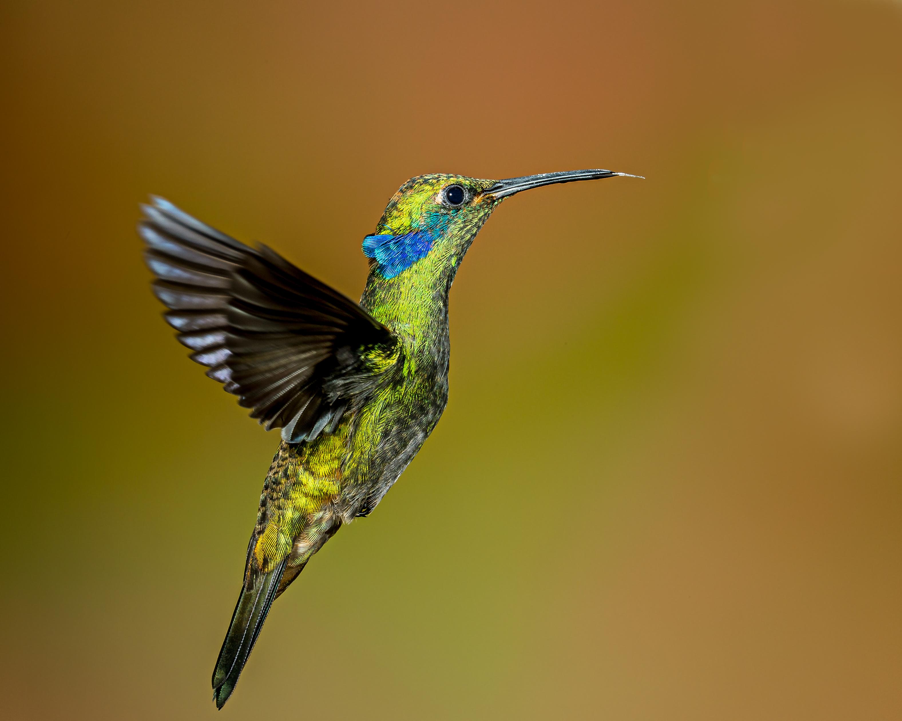 древнегреческий картинки птички колибри конечно