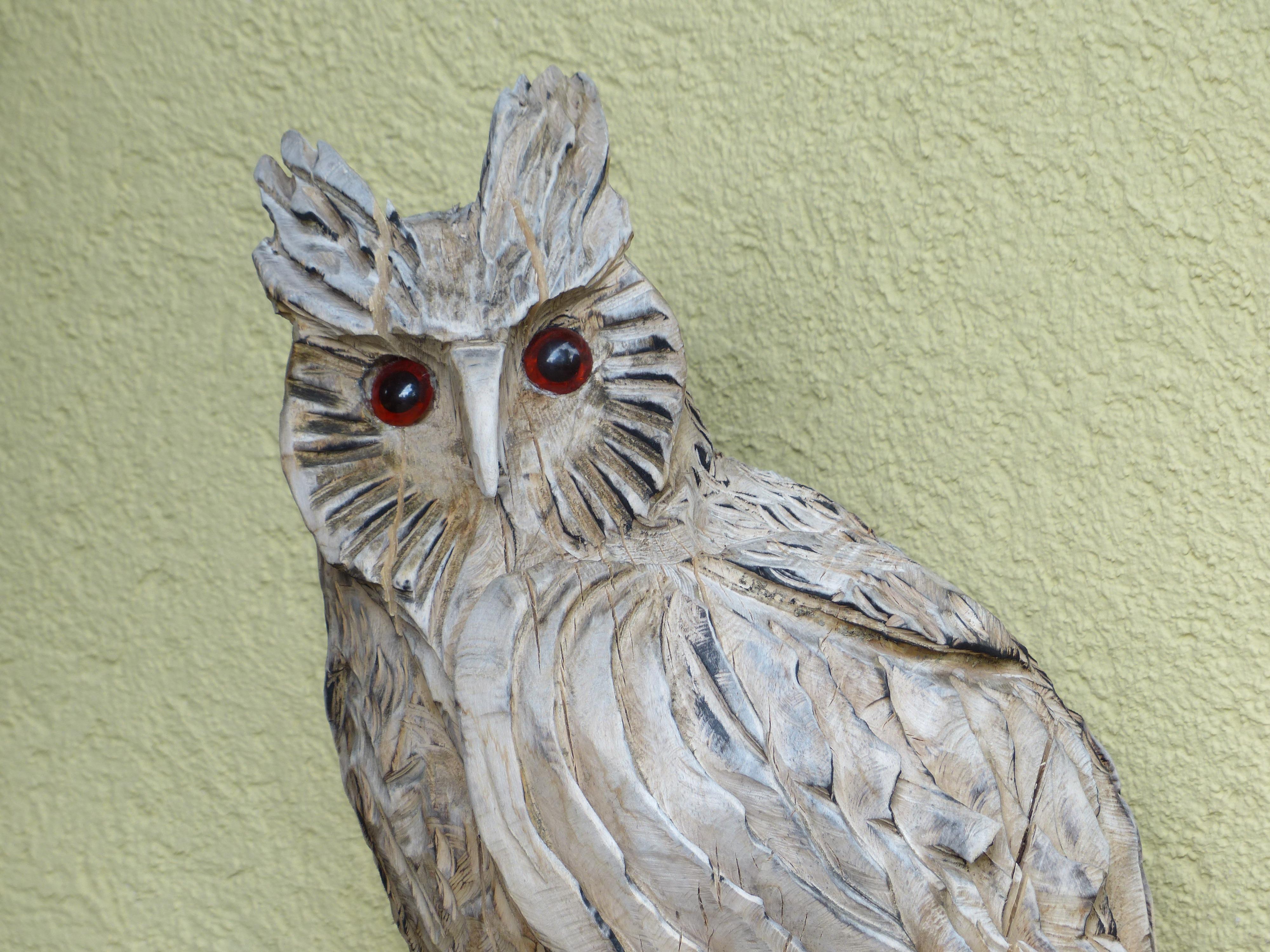 Gambar Sayap Paruh Burung Hantu Fauna Burung Buas