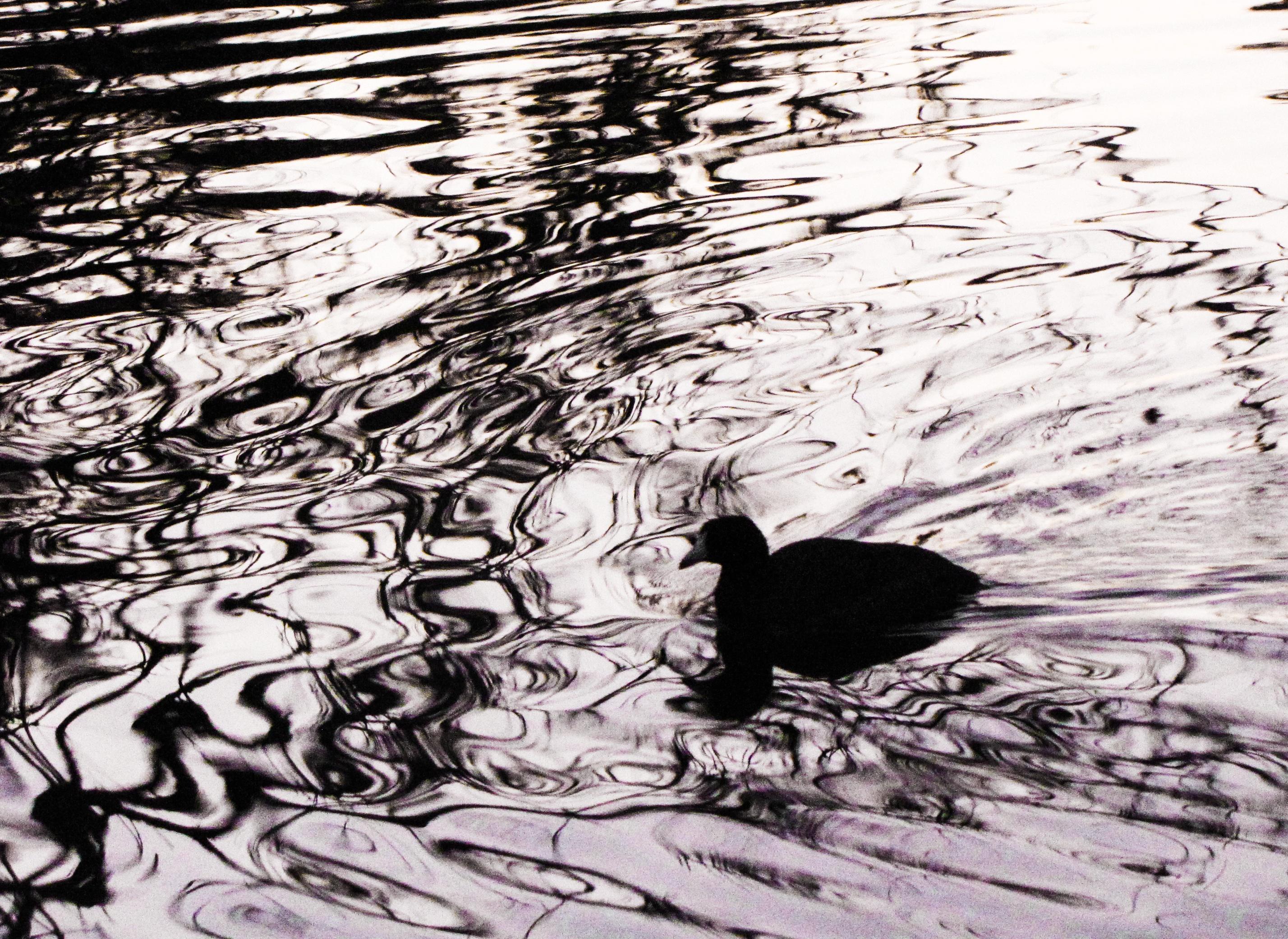 Koleksi Terbaru  Sketsa Gambar Burung