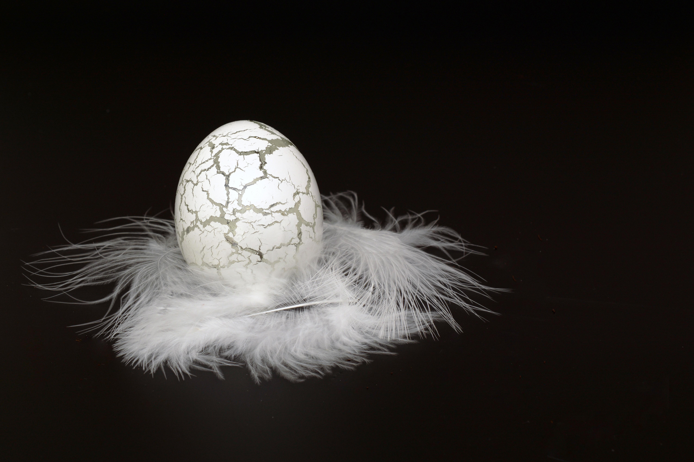 Gratis afbeeldingen : vogel vleugel zwart en wit glas duisternis