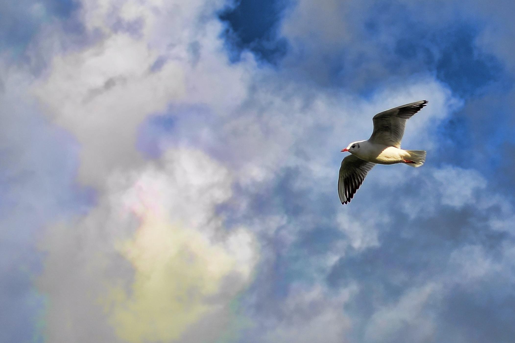 Картинки птицы летящей в небе