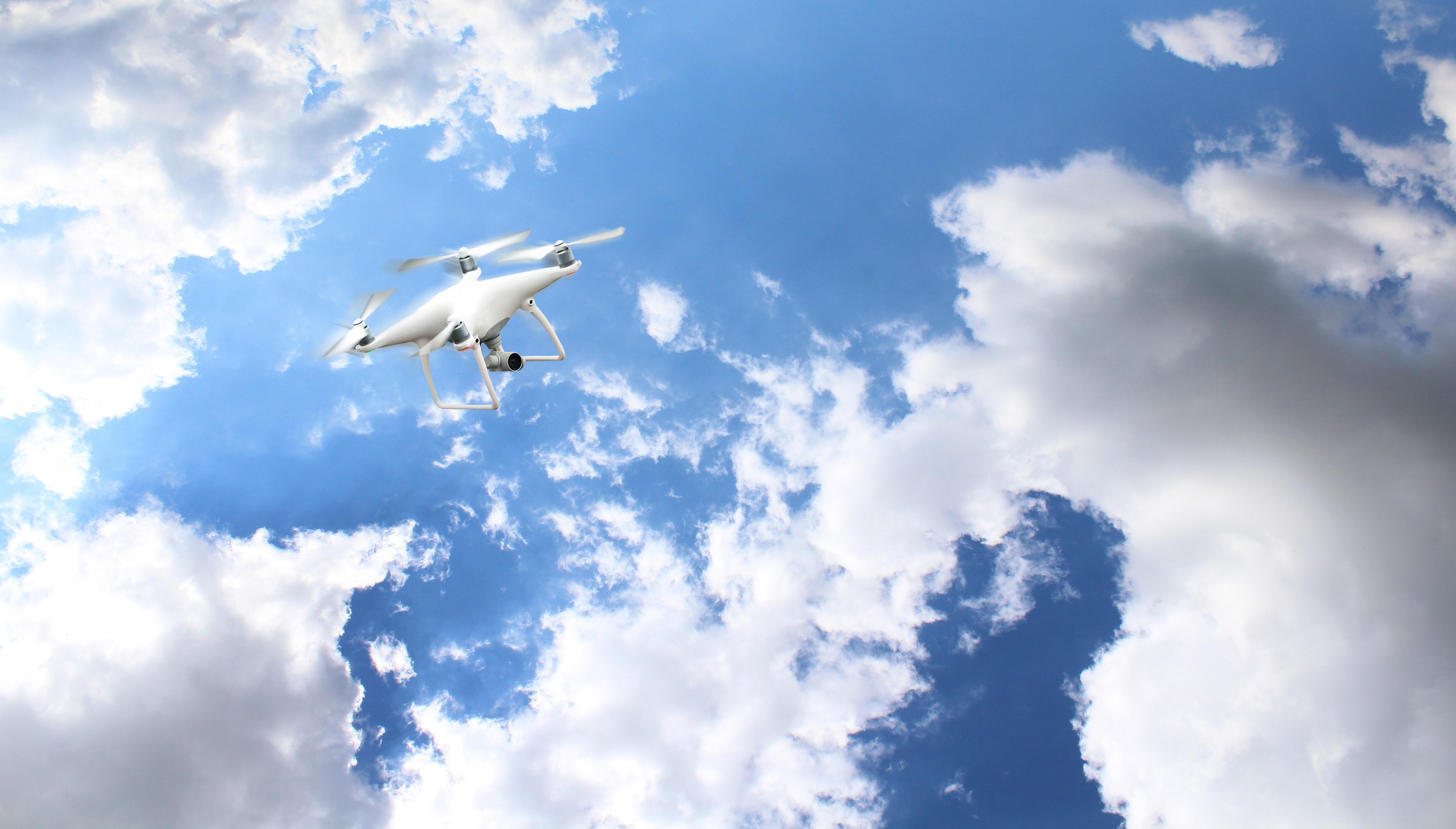 Gambar Burung Sayap Teknologi Kamera Sinar Matahari Suasana