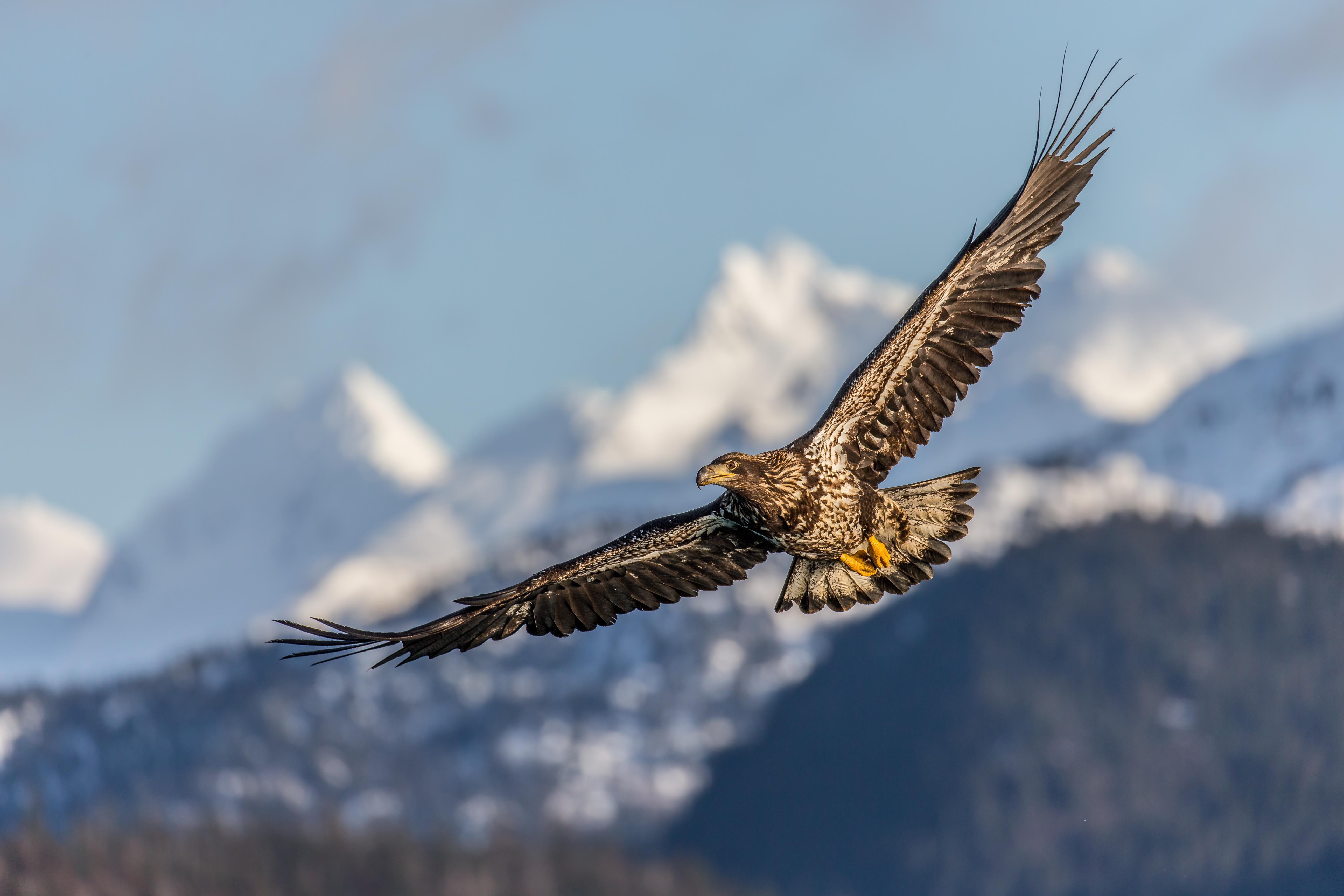 Полет орла без смс