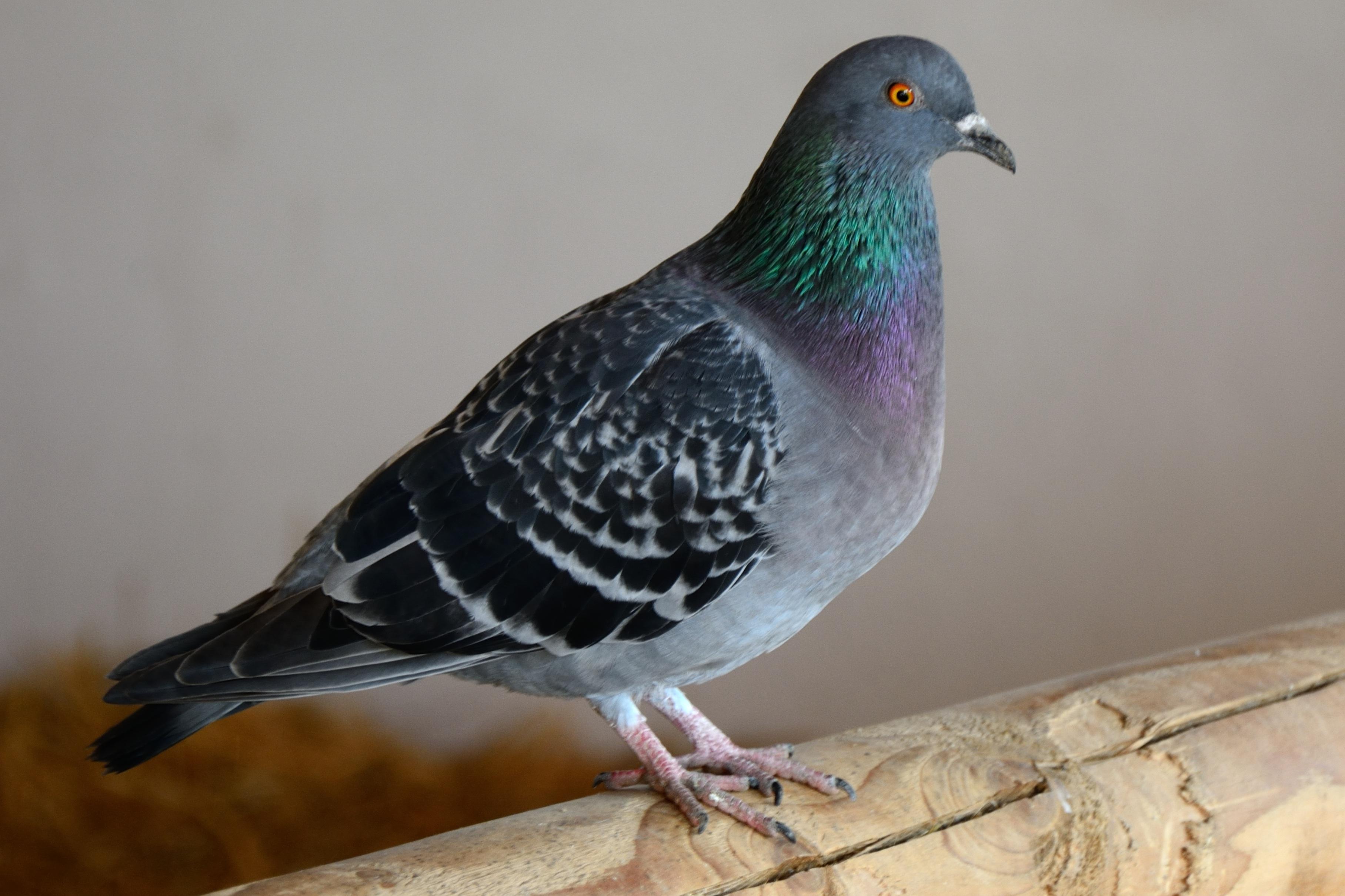 Gambar Sayap Tanah Pertanian Paruh Fauna Bulu Burung