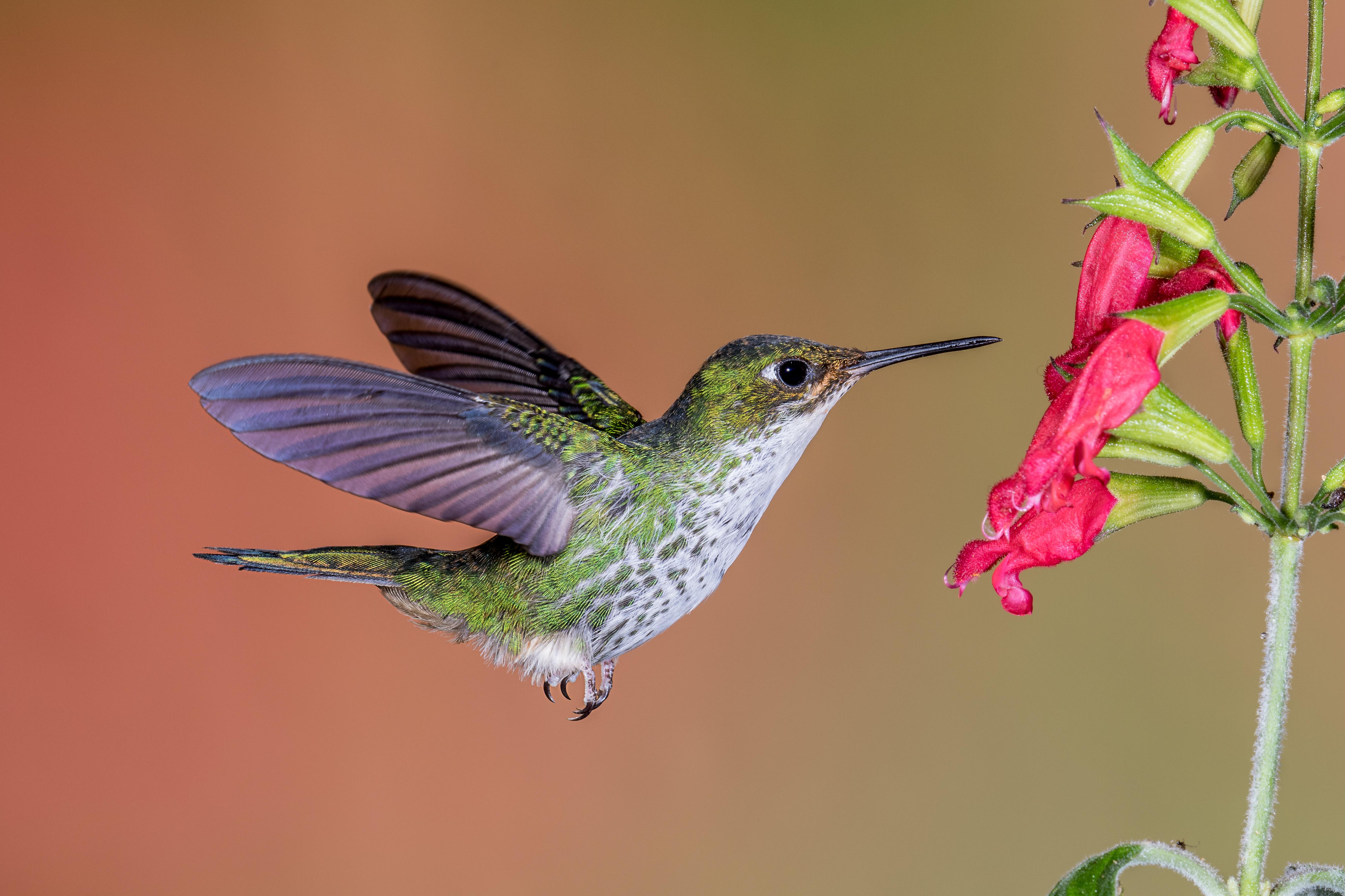 картинки с птичками колибри для приготовления