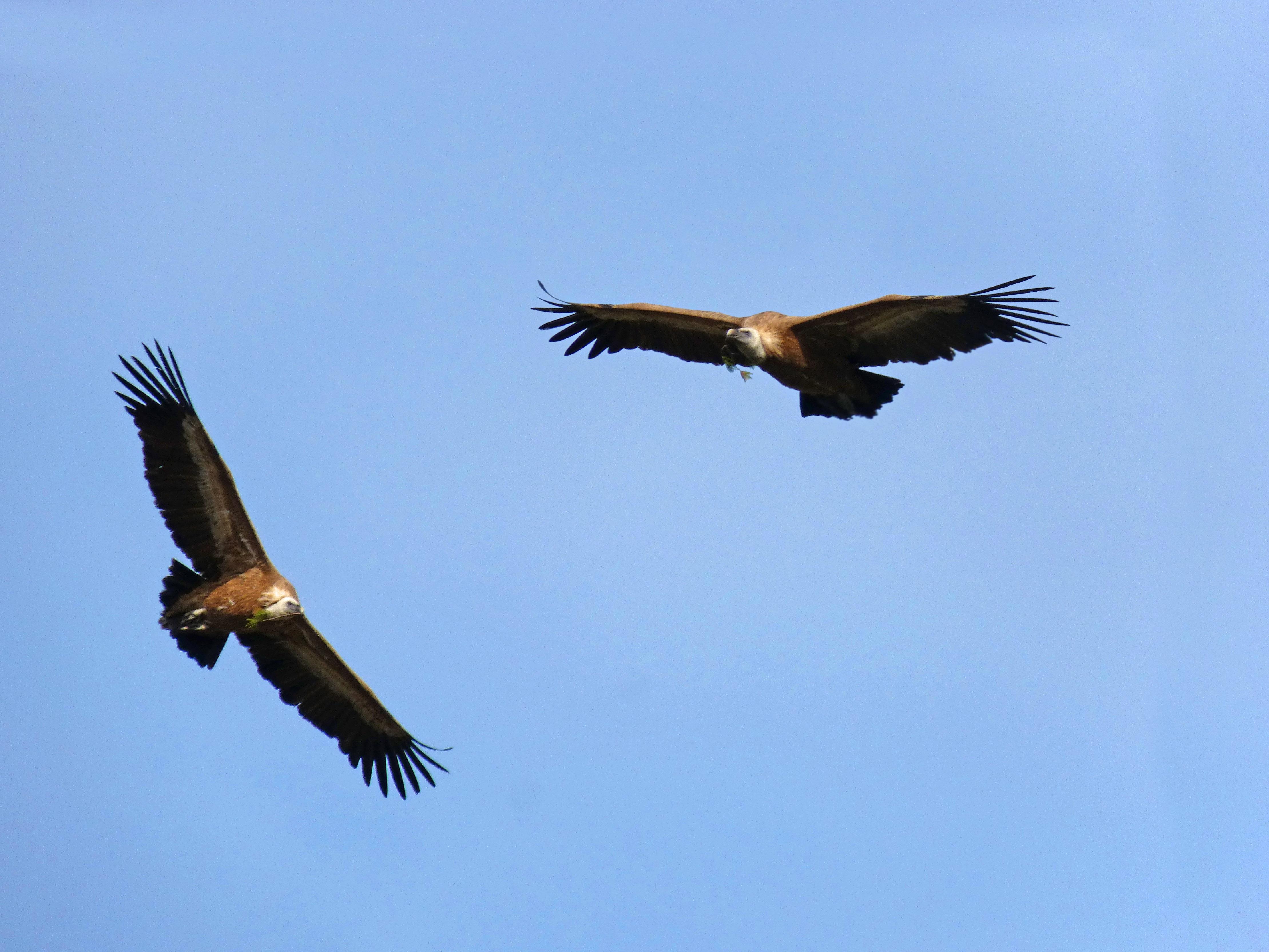 картинка два орла в небе если они