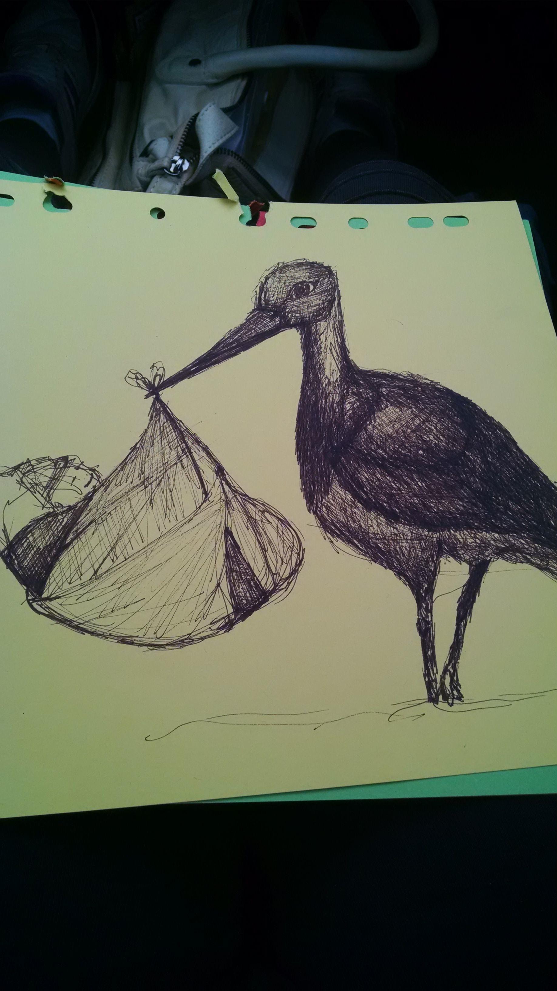 Gambar Burung Sayap Hijau Warna Lukisan Seni Sketsa