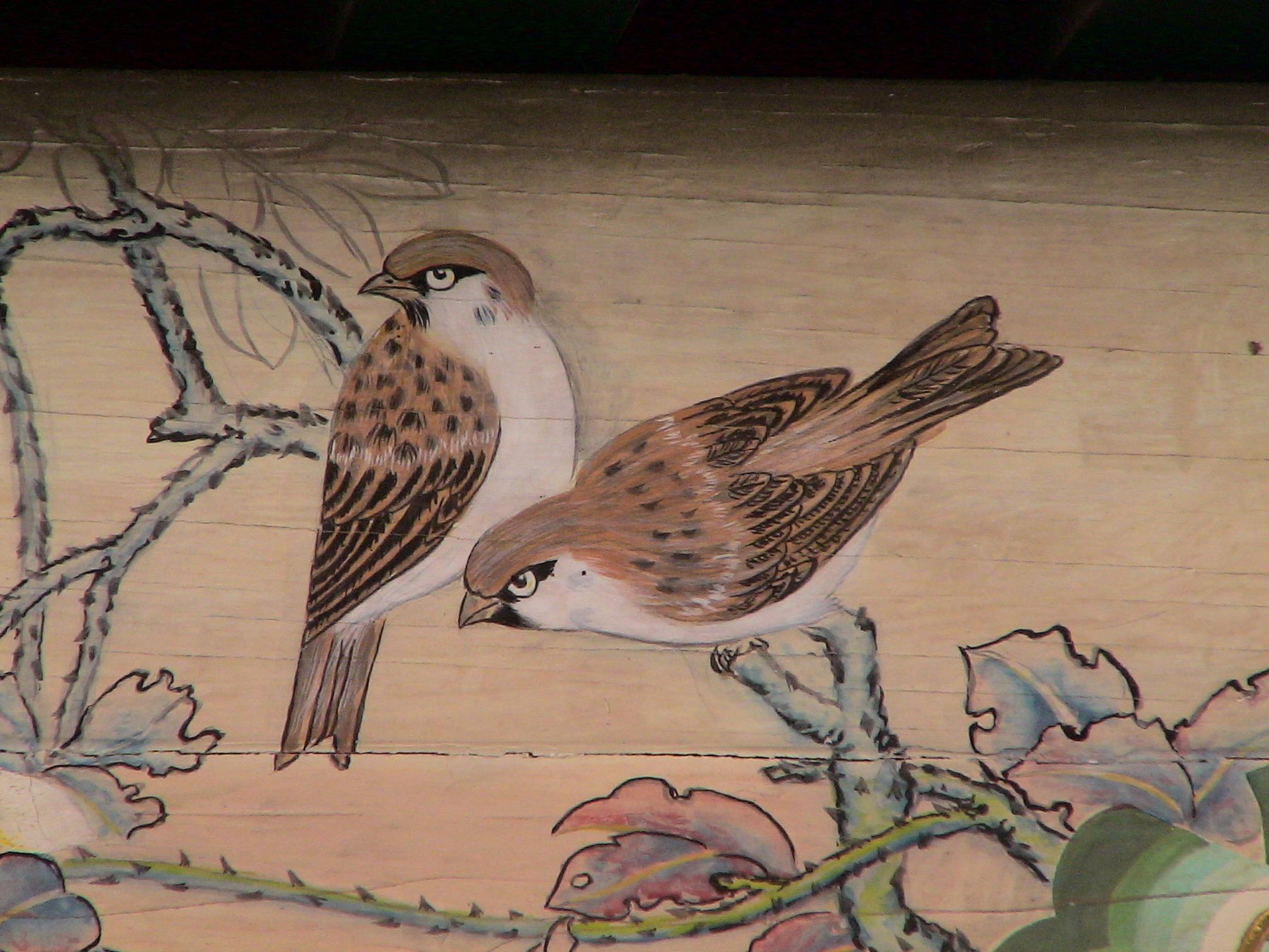 Gambar Sayap Coklat Fauna Ornamen Burung Burung