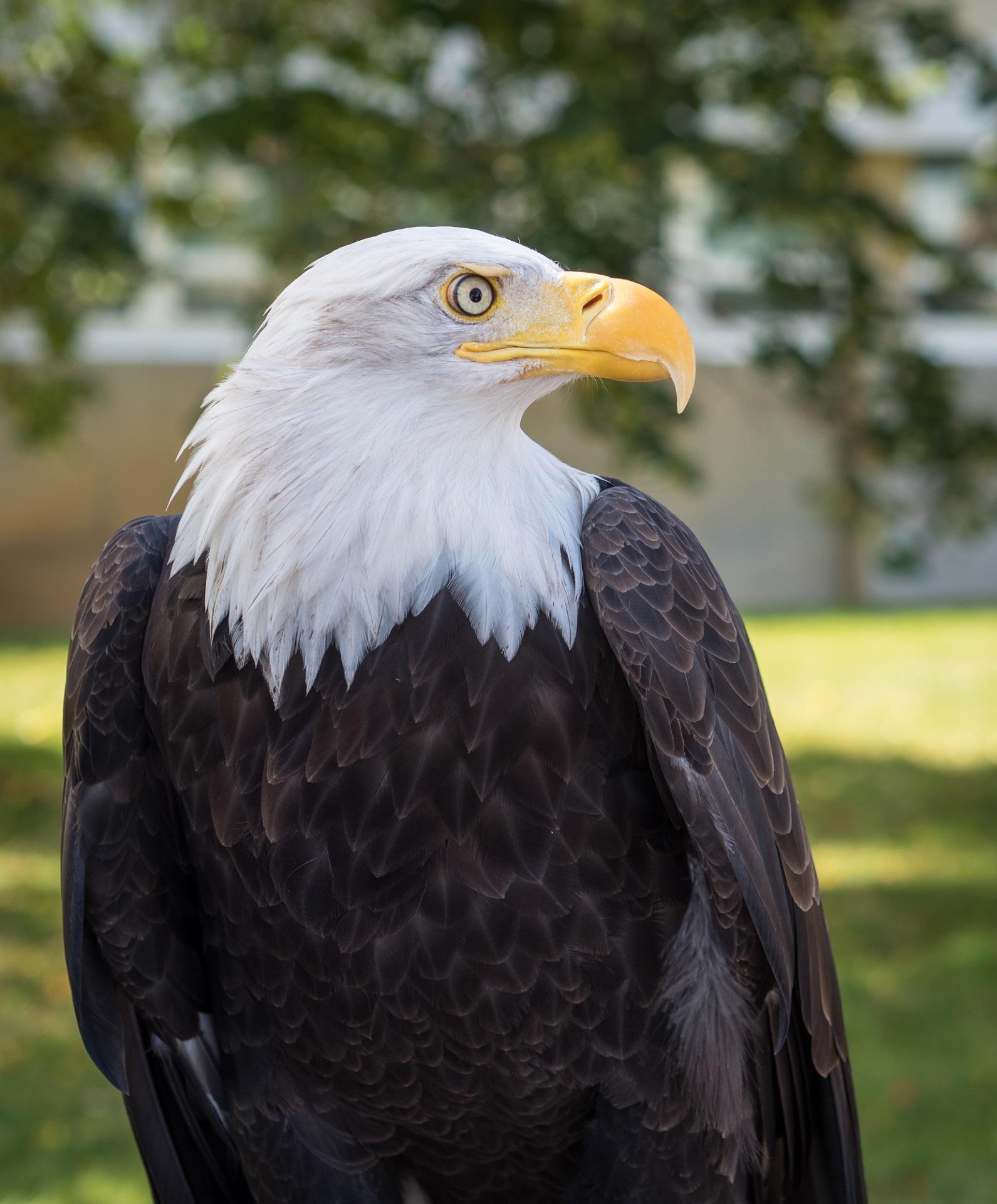 Почасовая фотосъемка орел друзья, сегодня