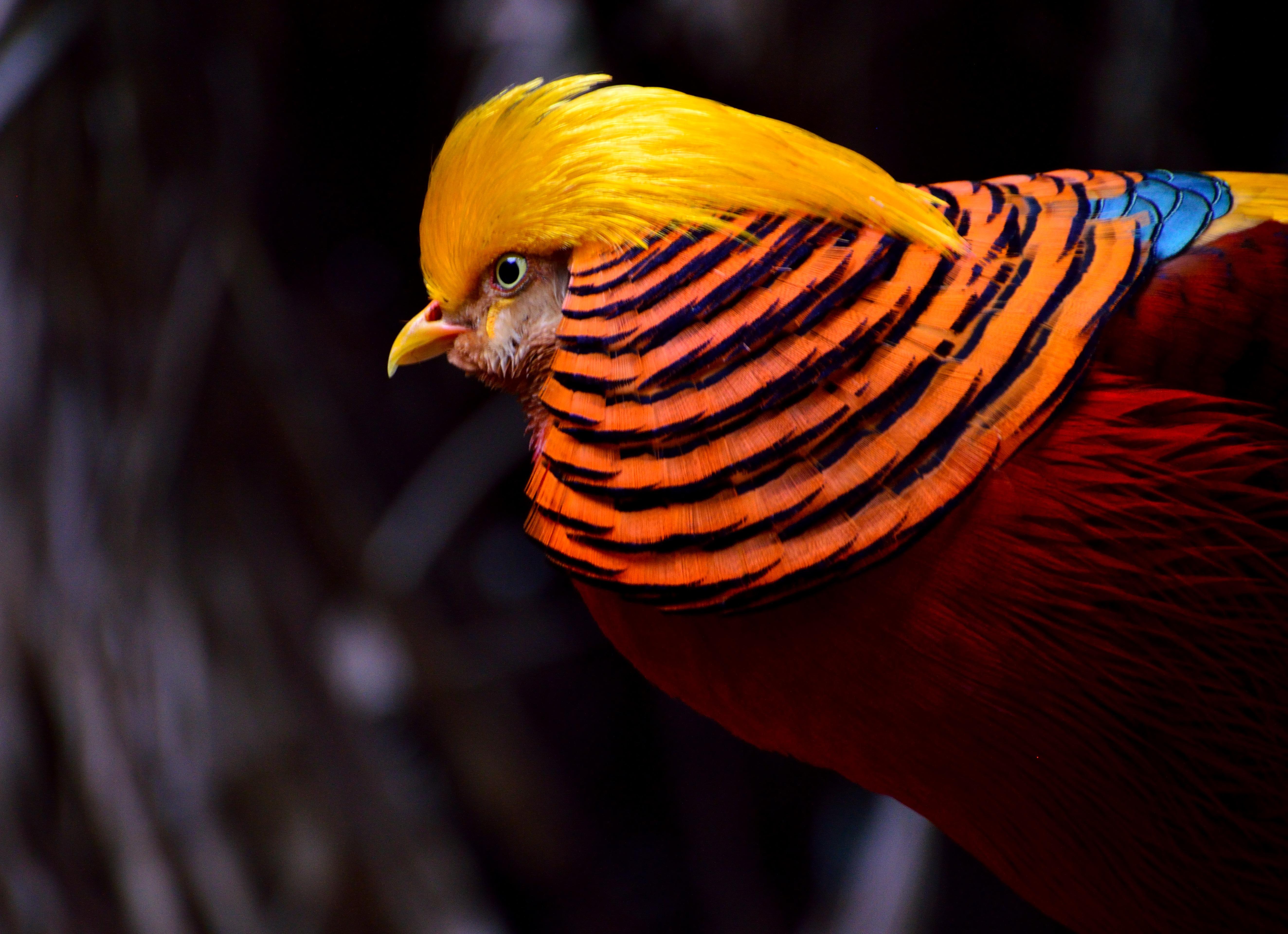 красота птиц фото и названия лермонтово
