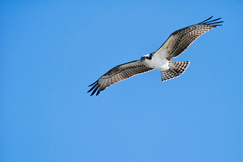 Free images wing seabird beak flight fauna bird of for Photo oiseau