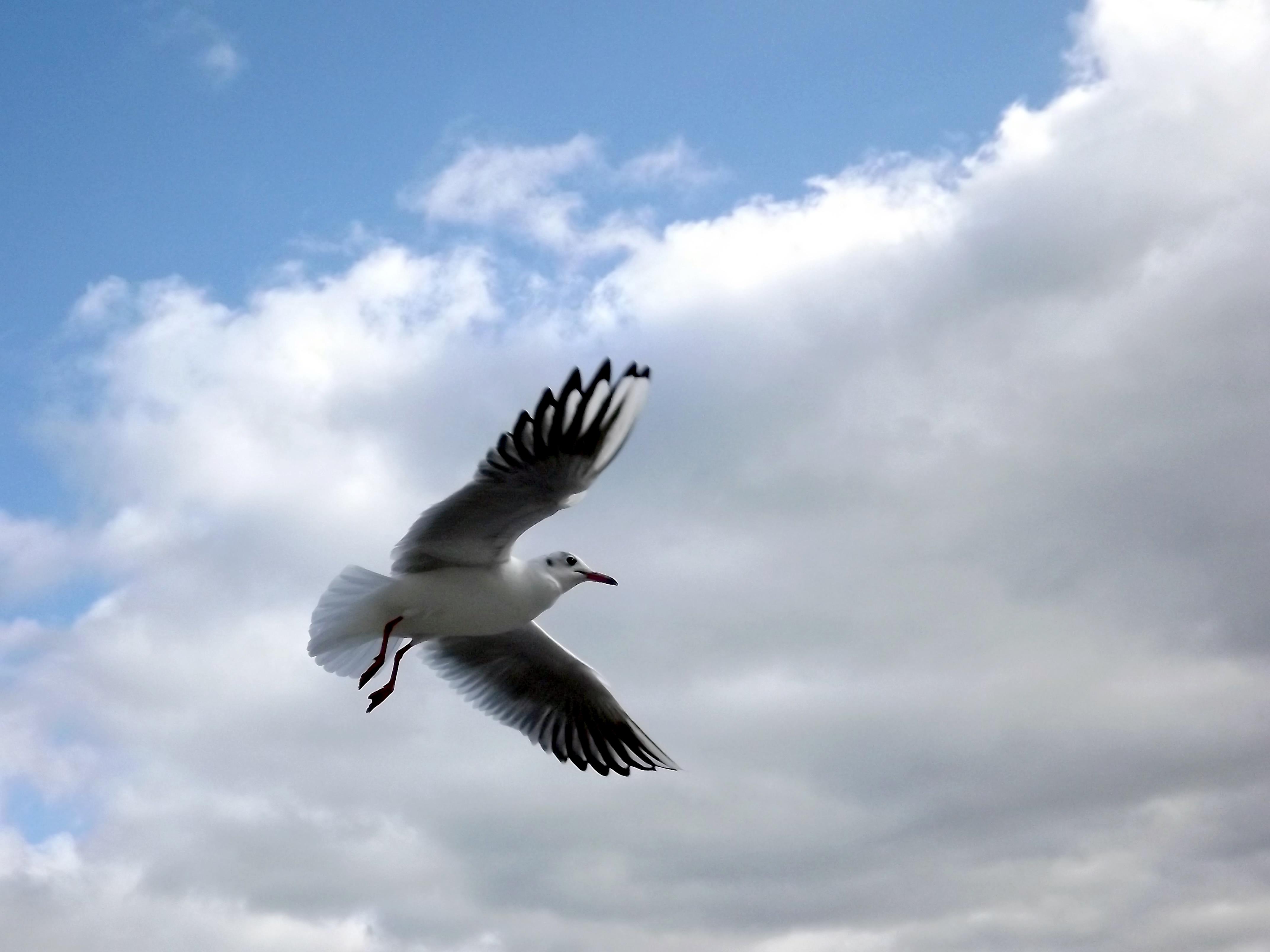 Φωτογραφίες του λευκού πουλί