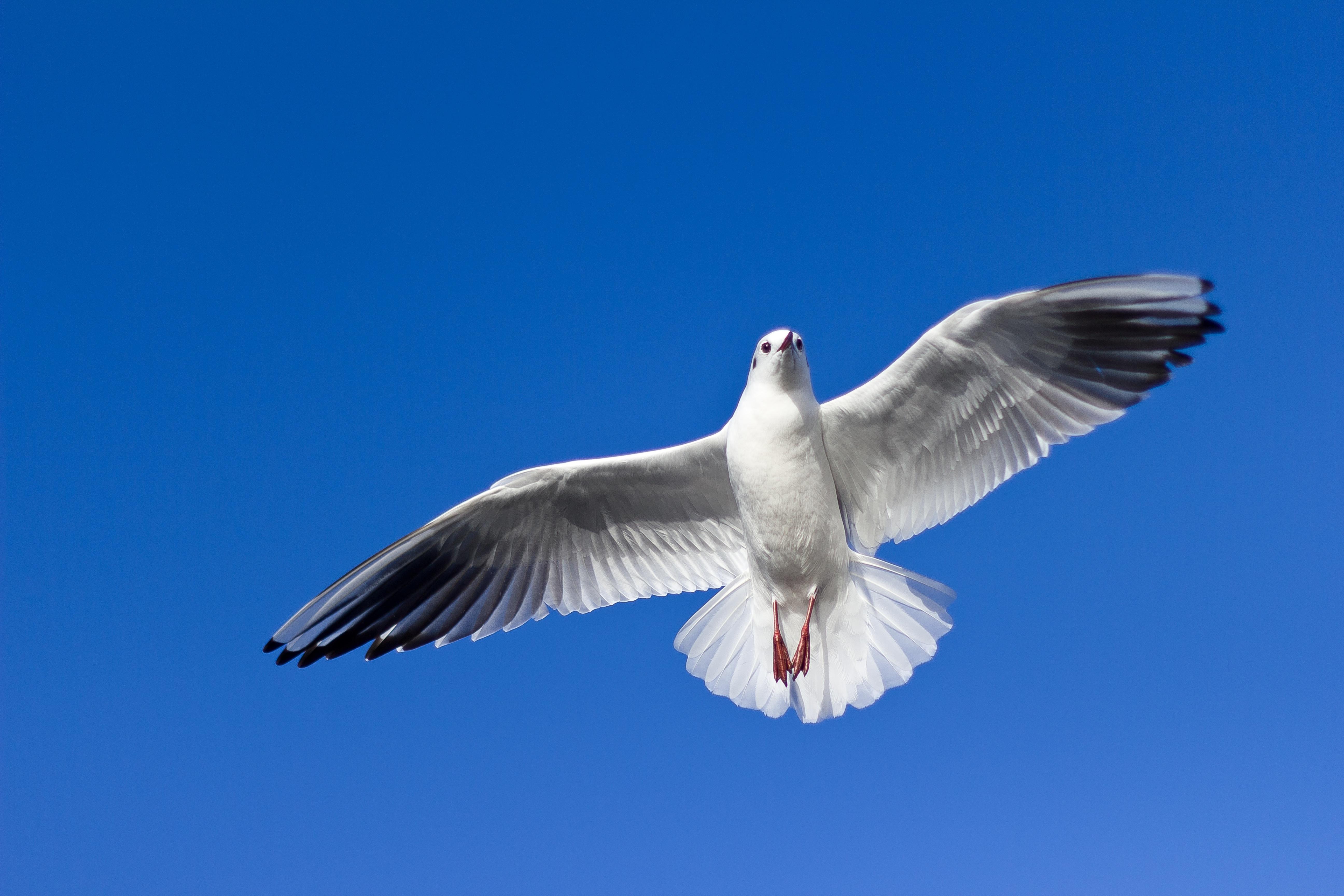 фото другие картинки парящие птицы повествует