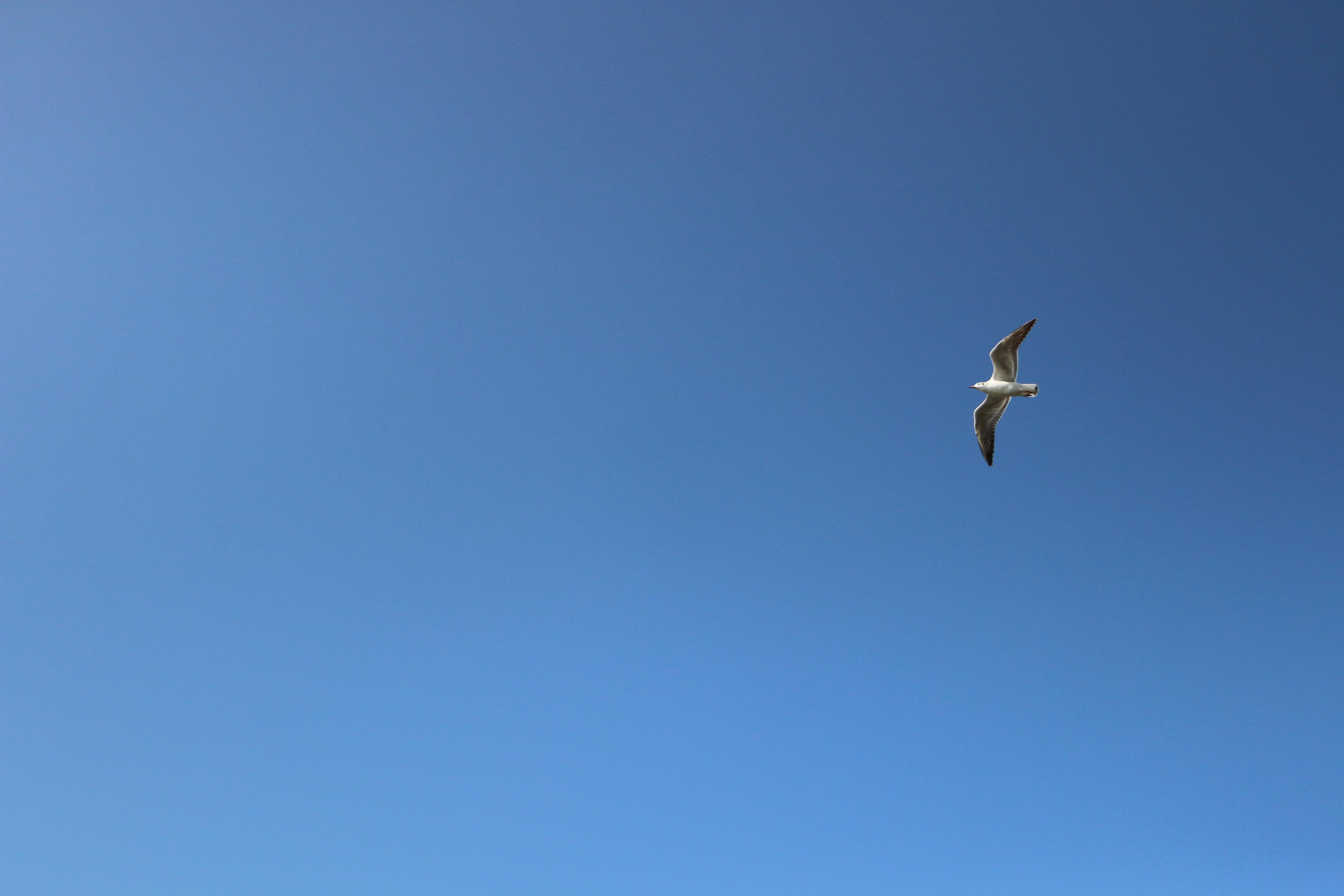 Kostenlose foto vogel flügel seevogel möwe flugzeug