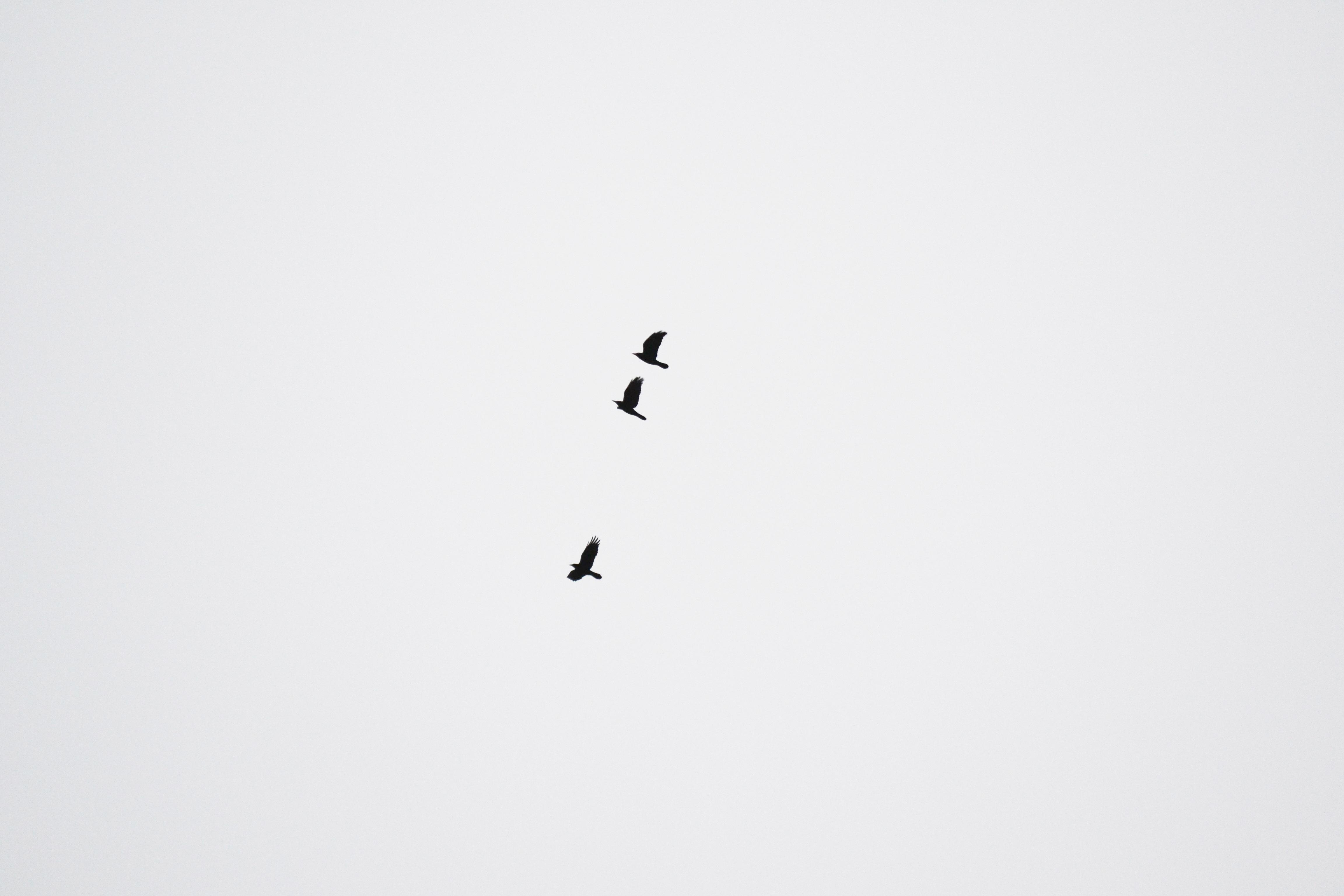 Gambar Sayap Langit Putih Penerbangan Garis Burung