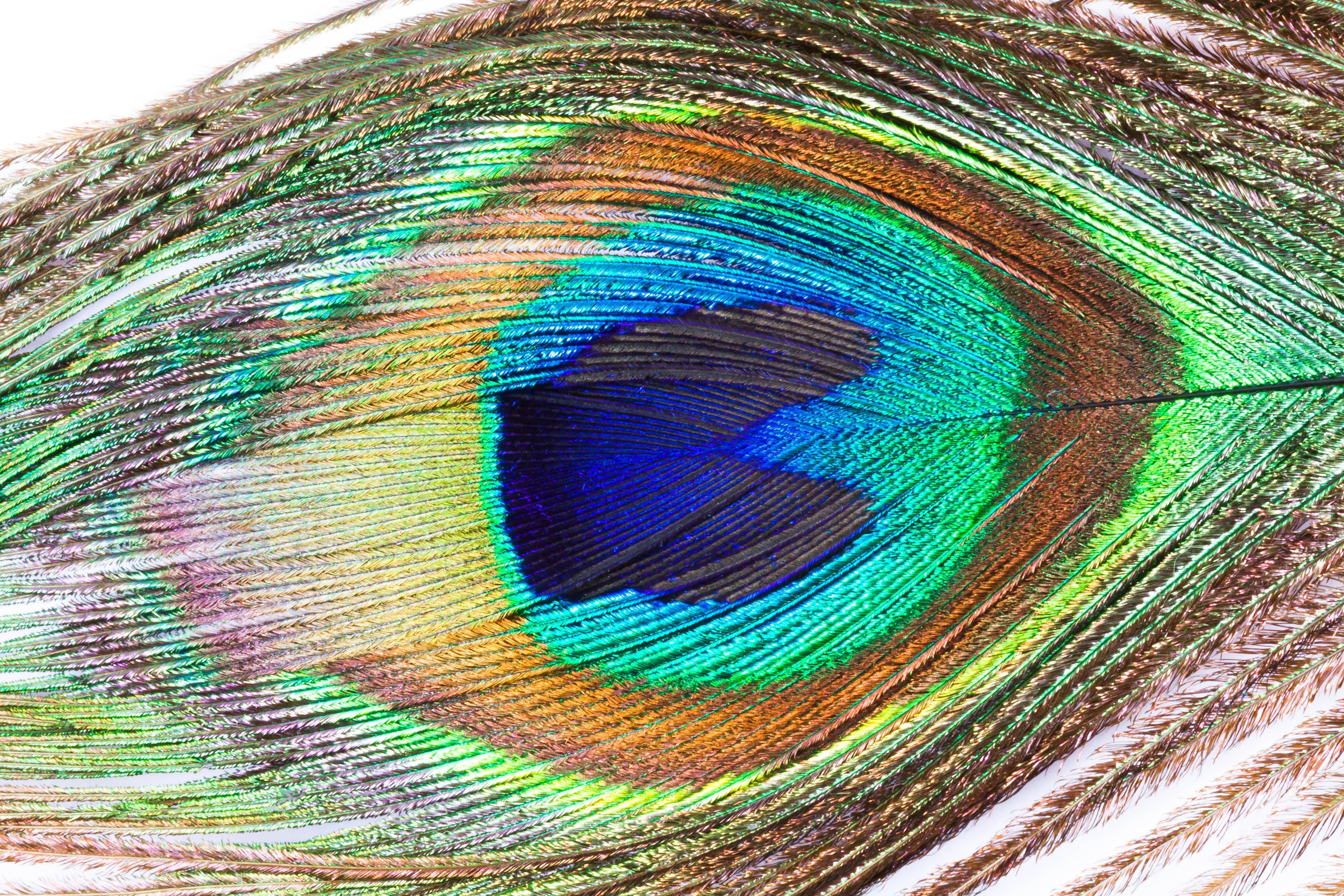 Immagini Belle Ala Struttura Verde Colore Macro Colorato