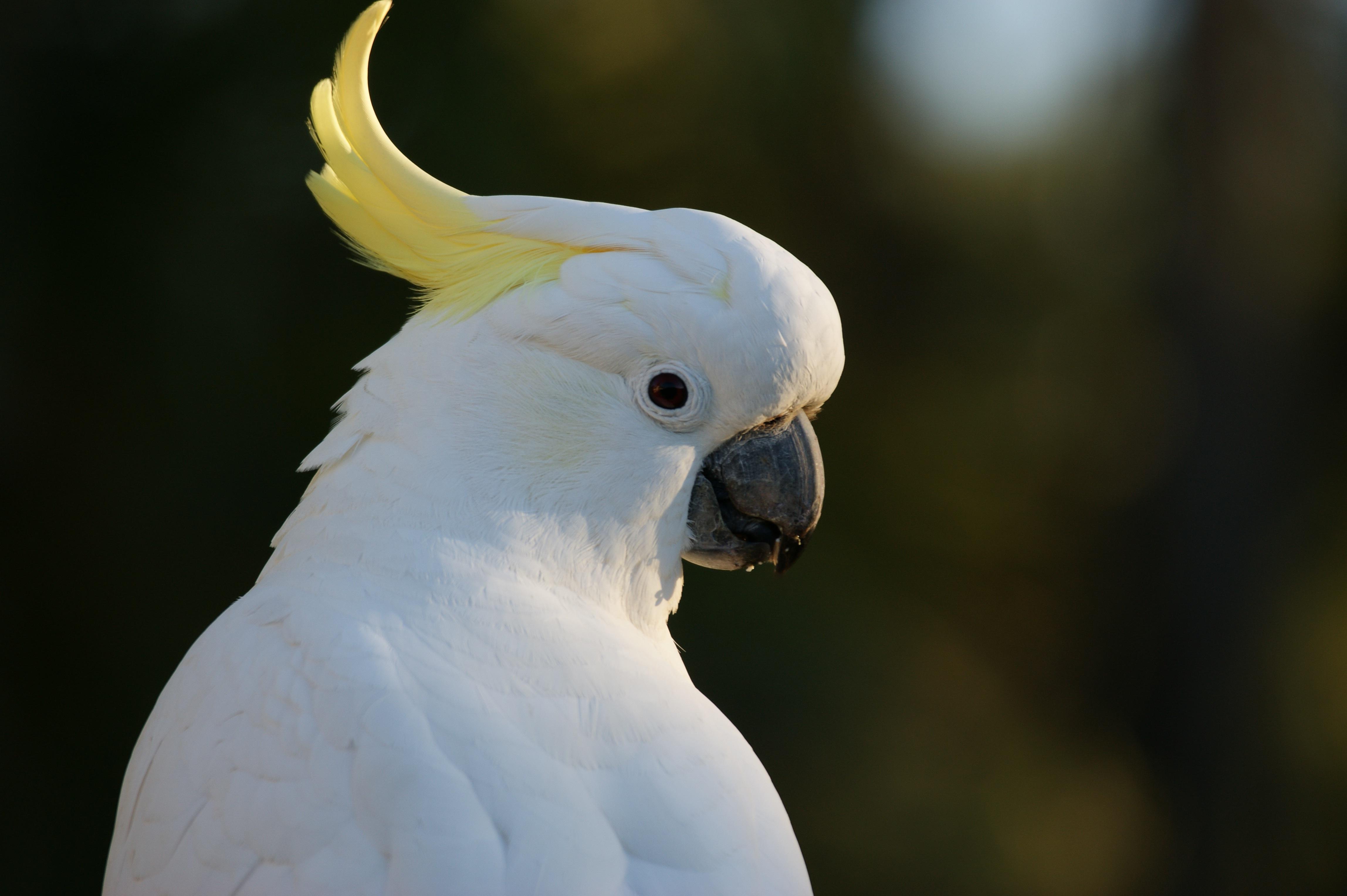 570 Gambar Binatang Peliharaan Berwarna HD Terbaik
