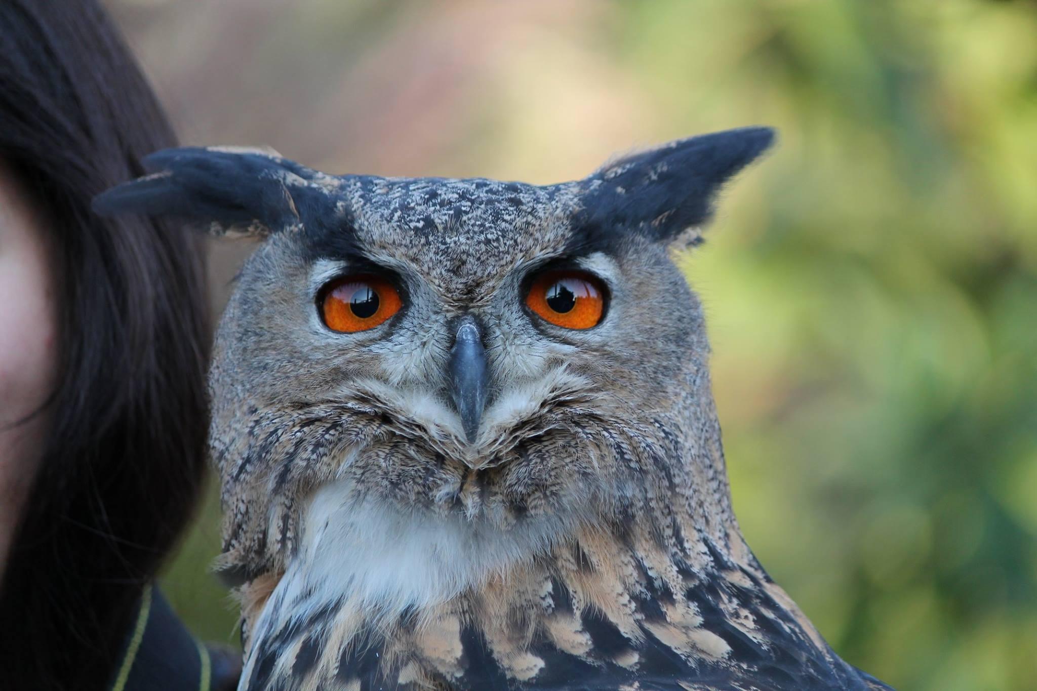 Außergewöhnlich Kostenlose foto : Vogel, Flügel, Tierwelt, Schnabel, blau, Fauna #LA_18