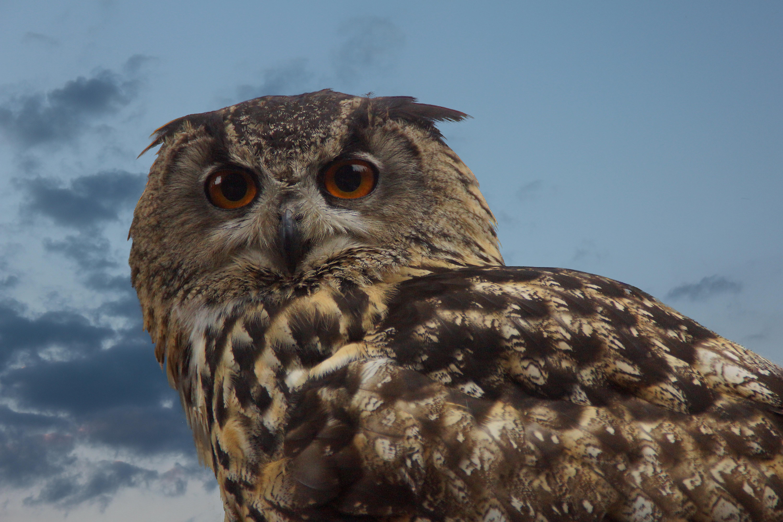 Fotos gratis  pjaro ala fauna silvestre pico cerca ave de