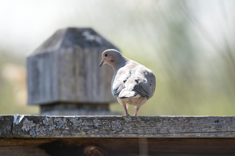 Владимир голубев бармалей фото служит обеденным