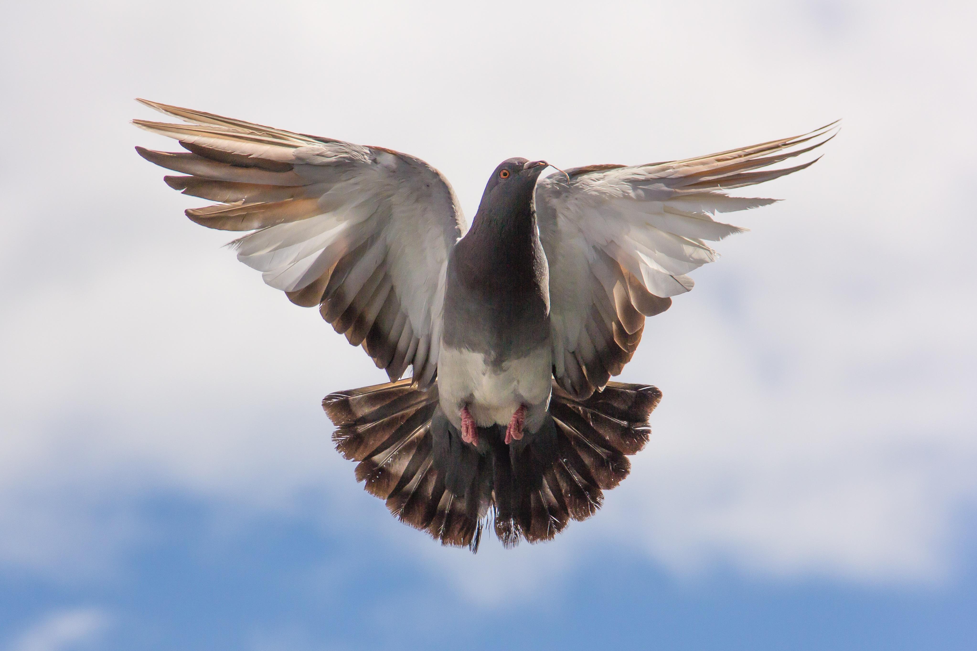 птица ветка клюв крылья  № 1996061 бесплатно