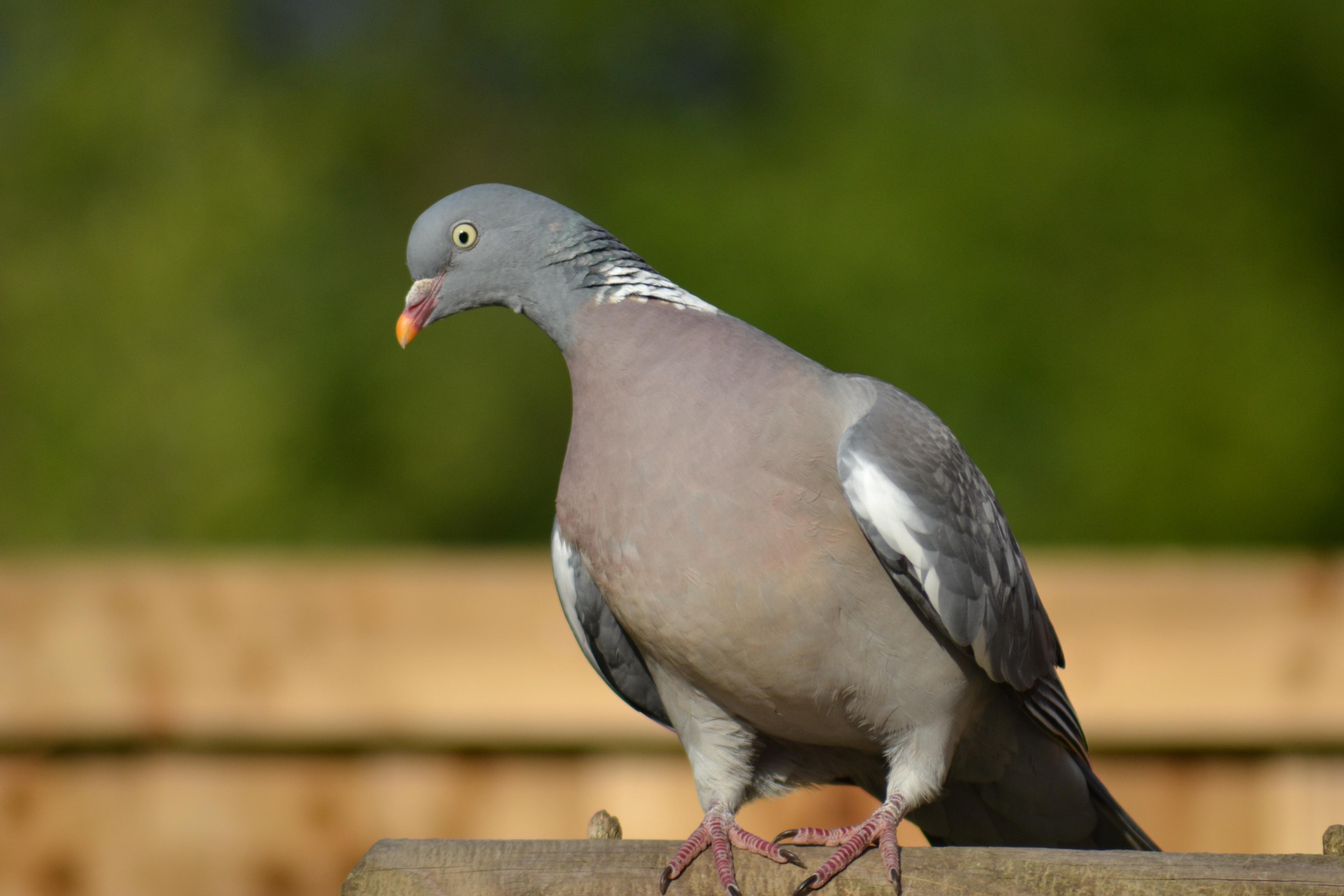 Рецепты с фото ленивых голубцов словам пострадавшей