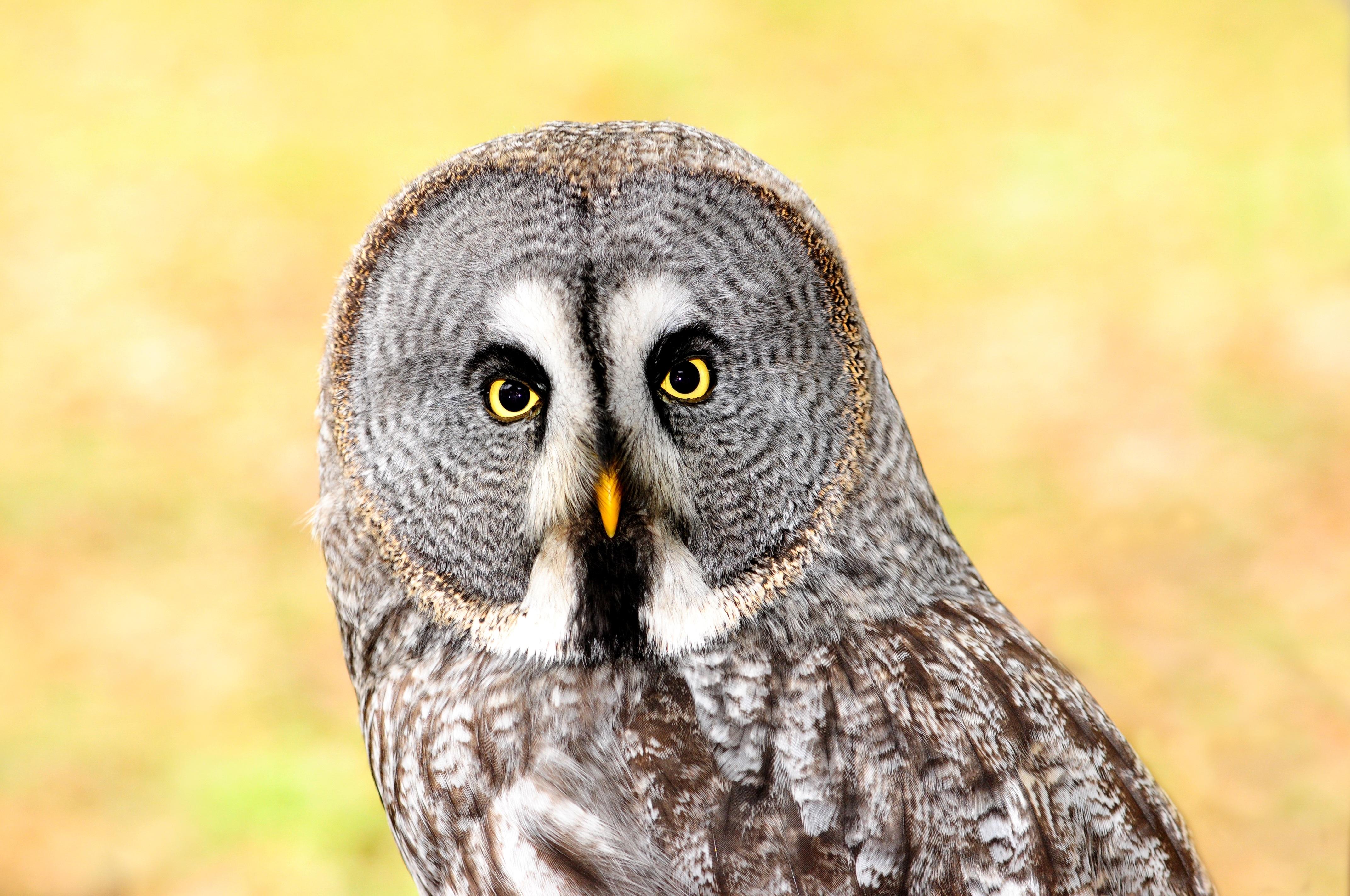 free images wing wildlife beak fauna bird of prey close up