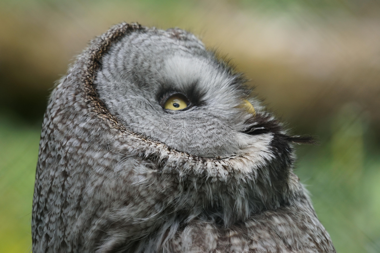 Cara Gambar Burung Hantu - Klik OK