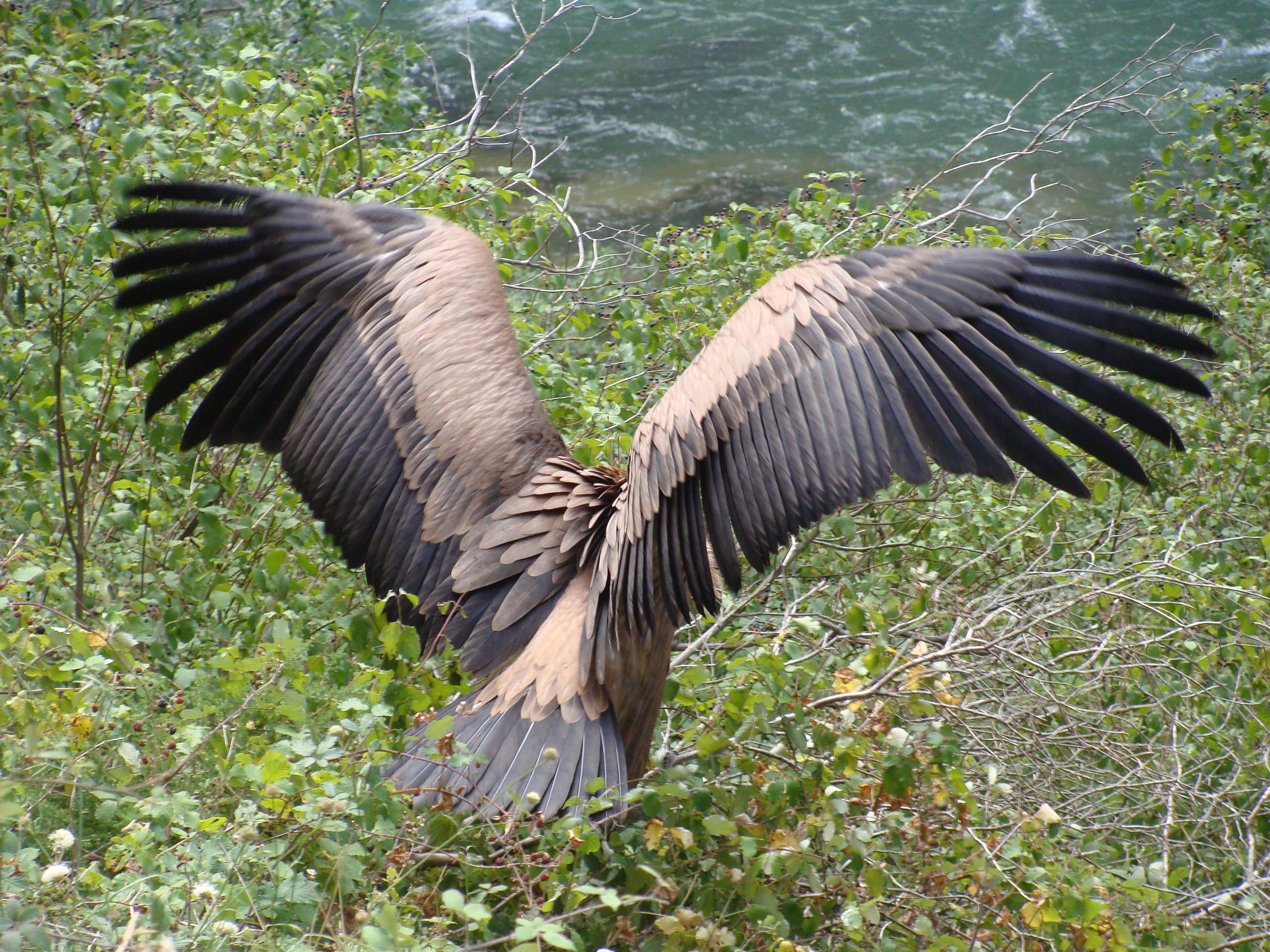цвет крыло птицы фотографии так