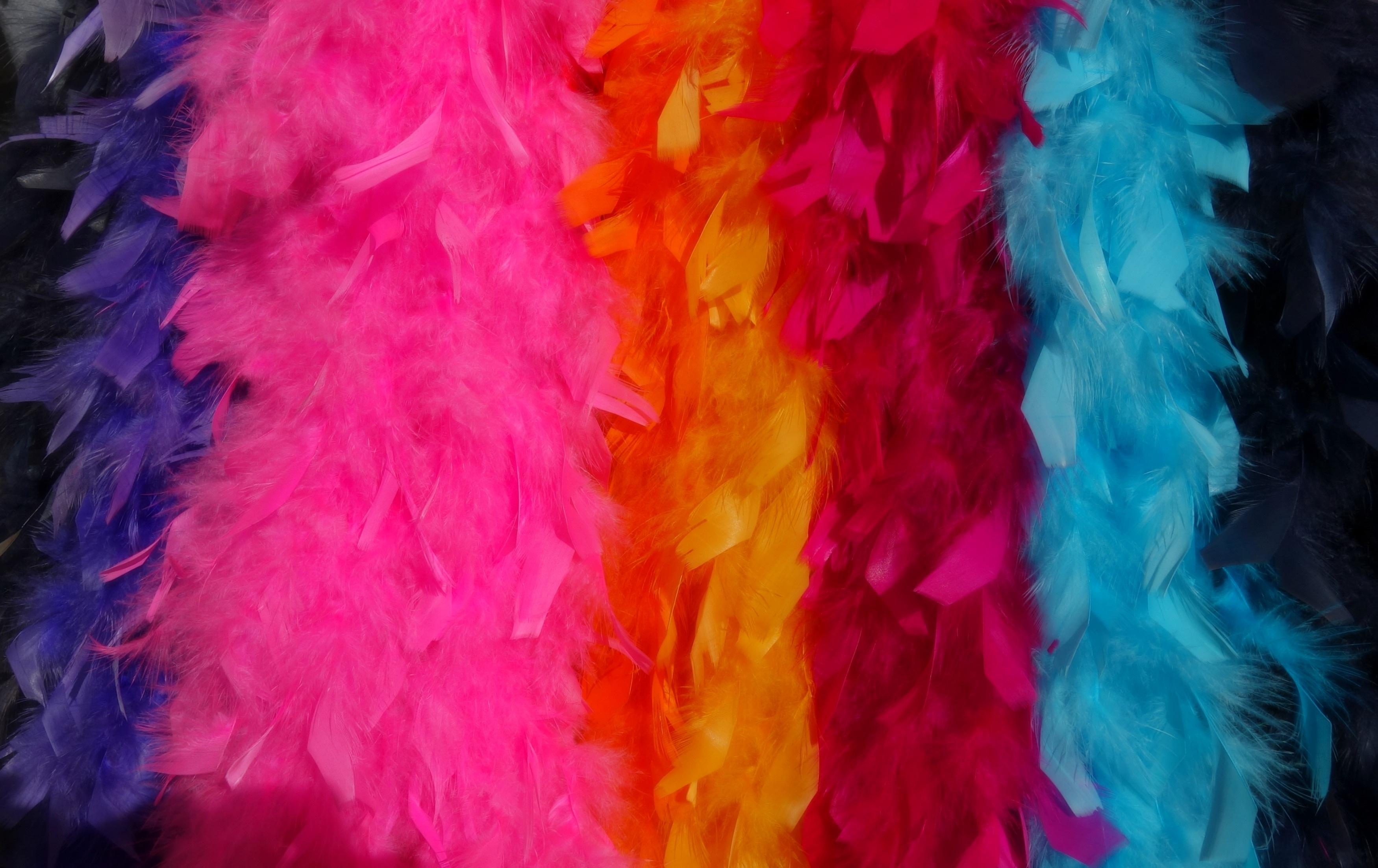 Fotos gratis : pájaro, ala, mujer, Retro, hembra, color, mercado ...